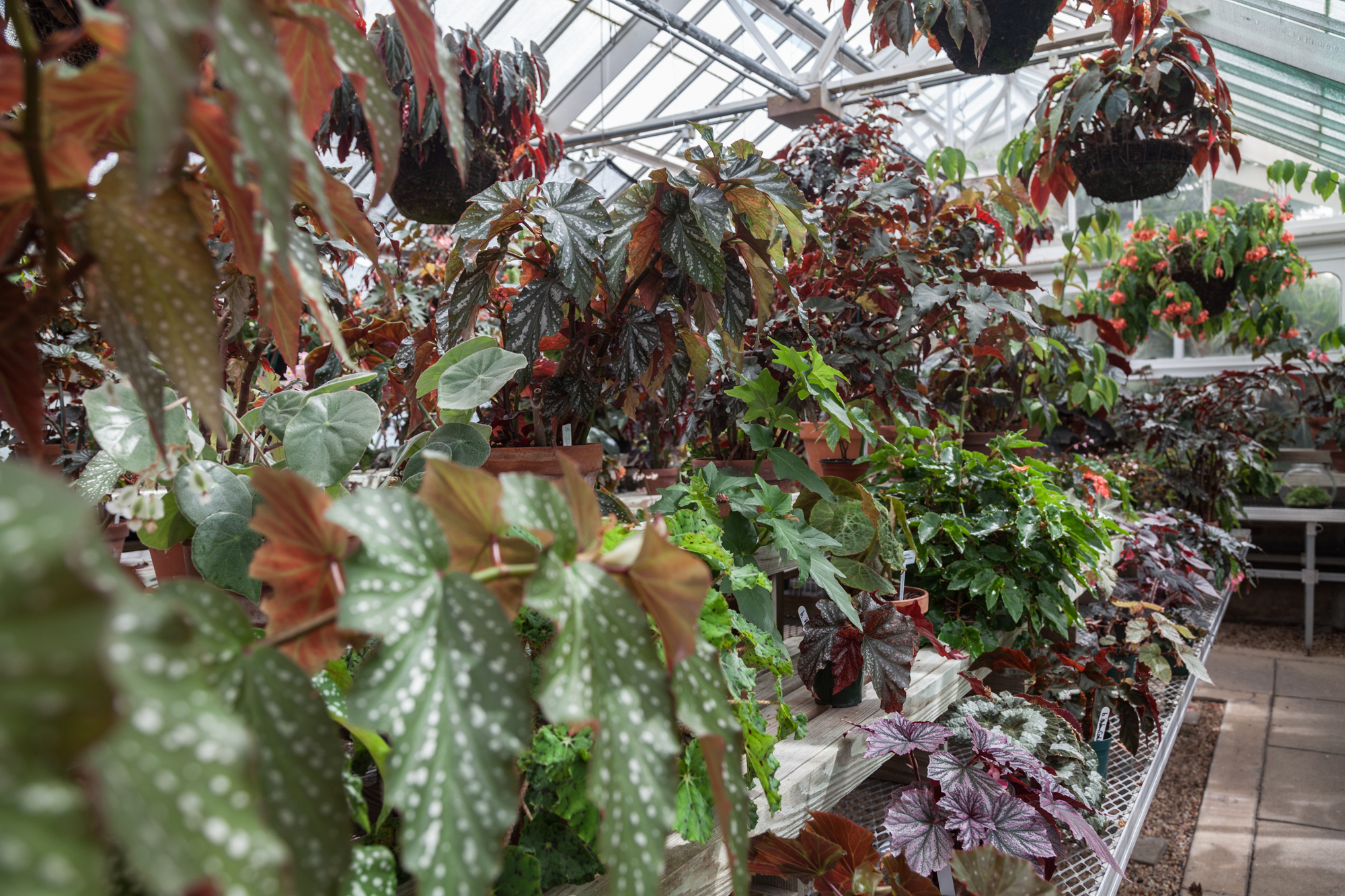 Planting-Fields-Arboretum-Greenhouse-Homestead-Brooklyn-Bromeliads.jpg