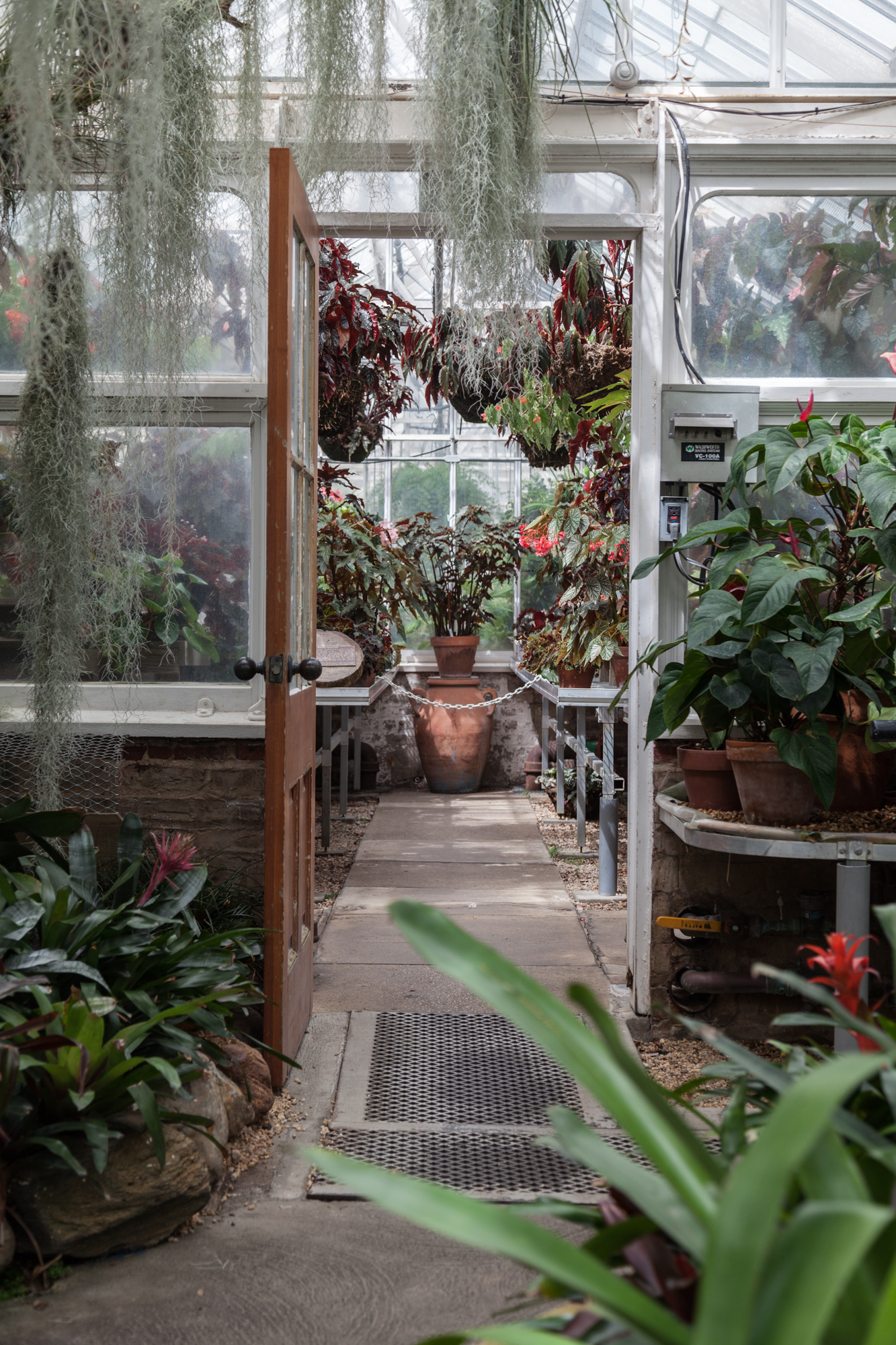 Now entering the Bromeliad Room