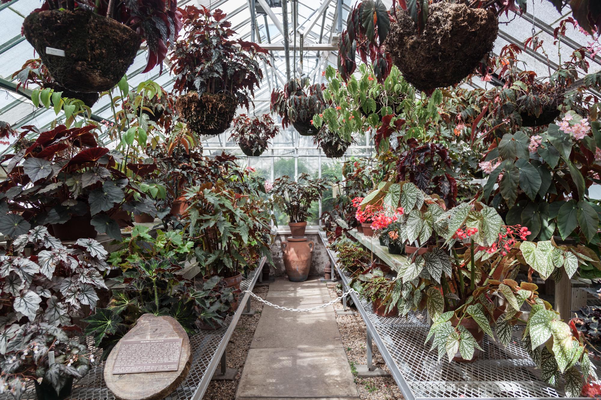 Planting-Fields-Arboretum-Greenhouse-Homestead-Brooklyn-Begonia-Room.jpg