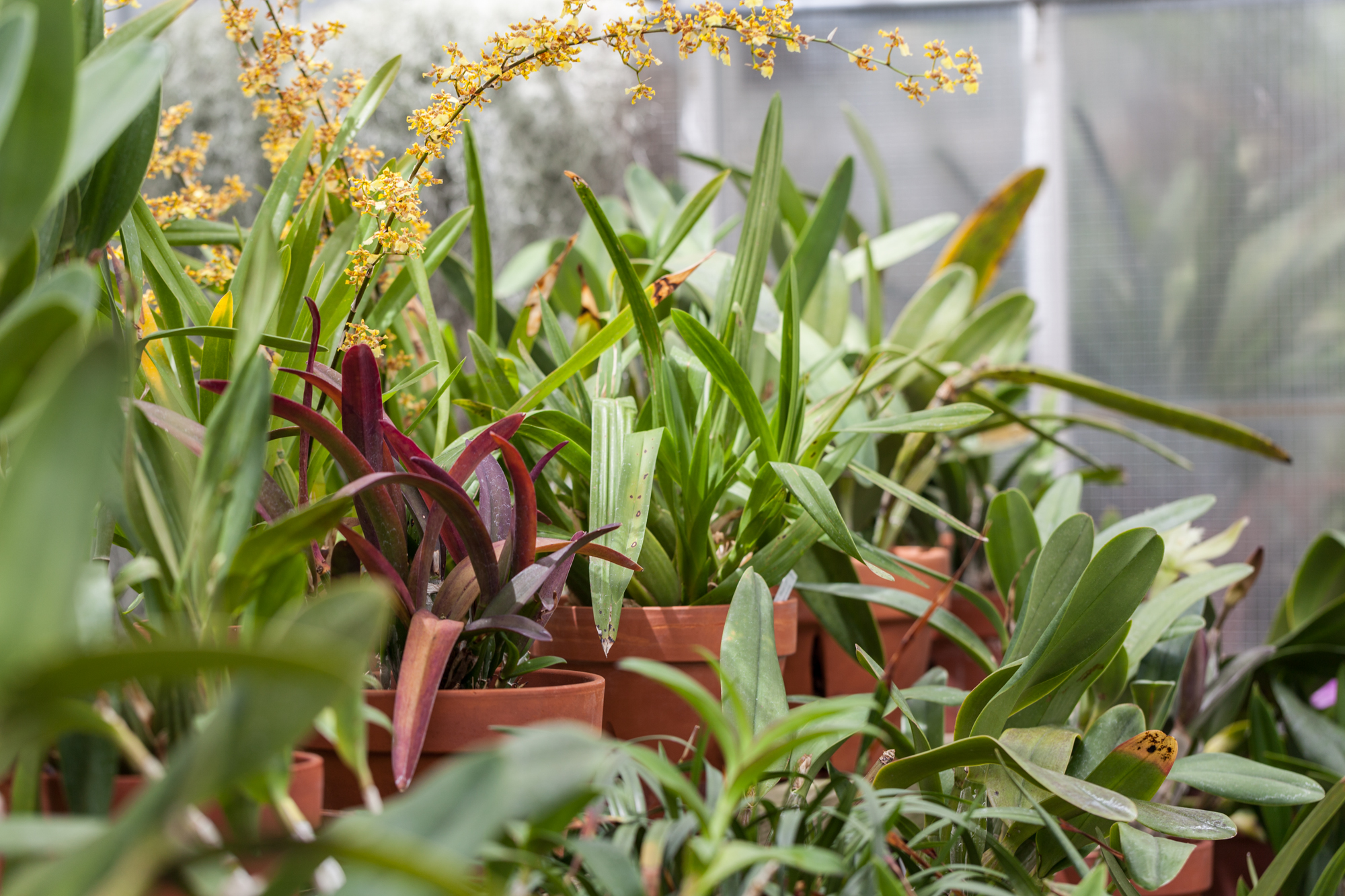 Into the orchid room