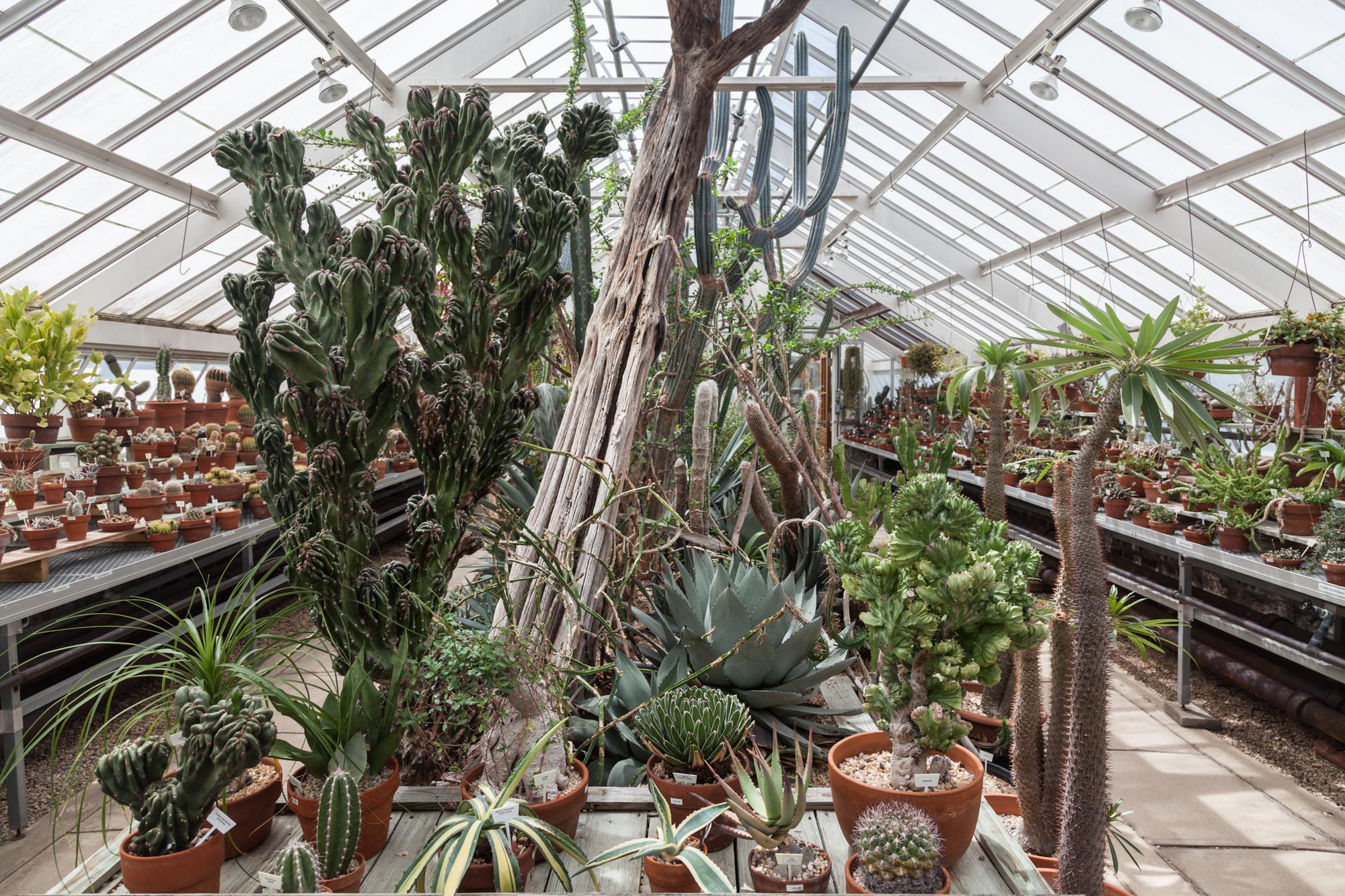 The cacti and succulent corner.