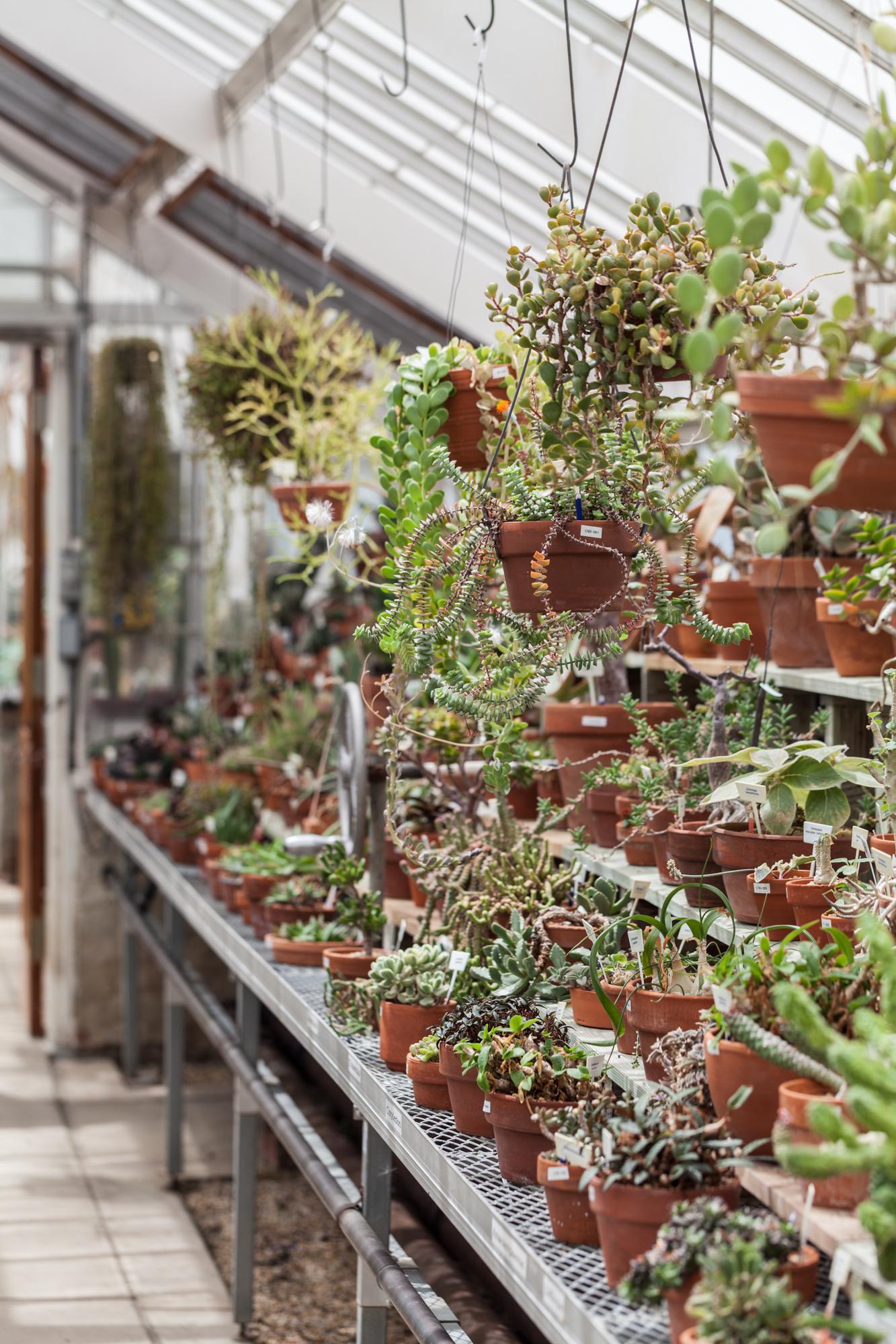 Planting-Fields-Greenhouse-Summer-Rayne-Oakes-Homestead-Brooklyn-succulents.jpg