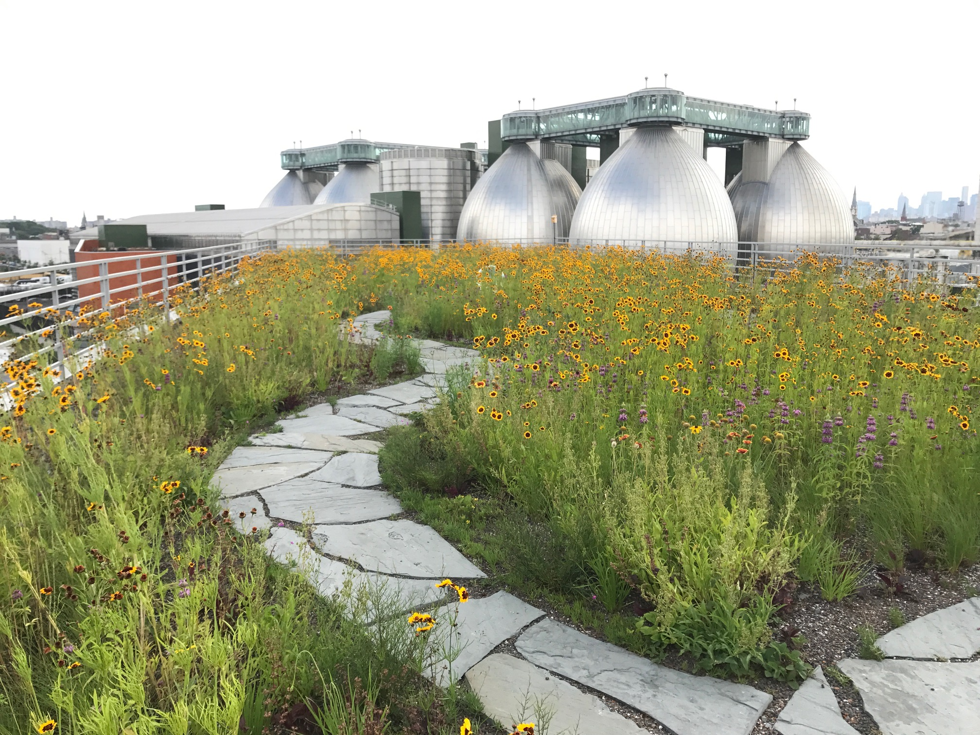 A photo of Kingsland Wildflowers in full bloom after it's been fully landscaped and planted. Weeding, watering and upkeep is still necessary, but much of the roof takes care of itself.