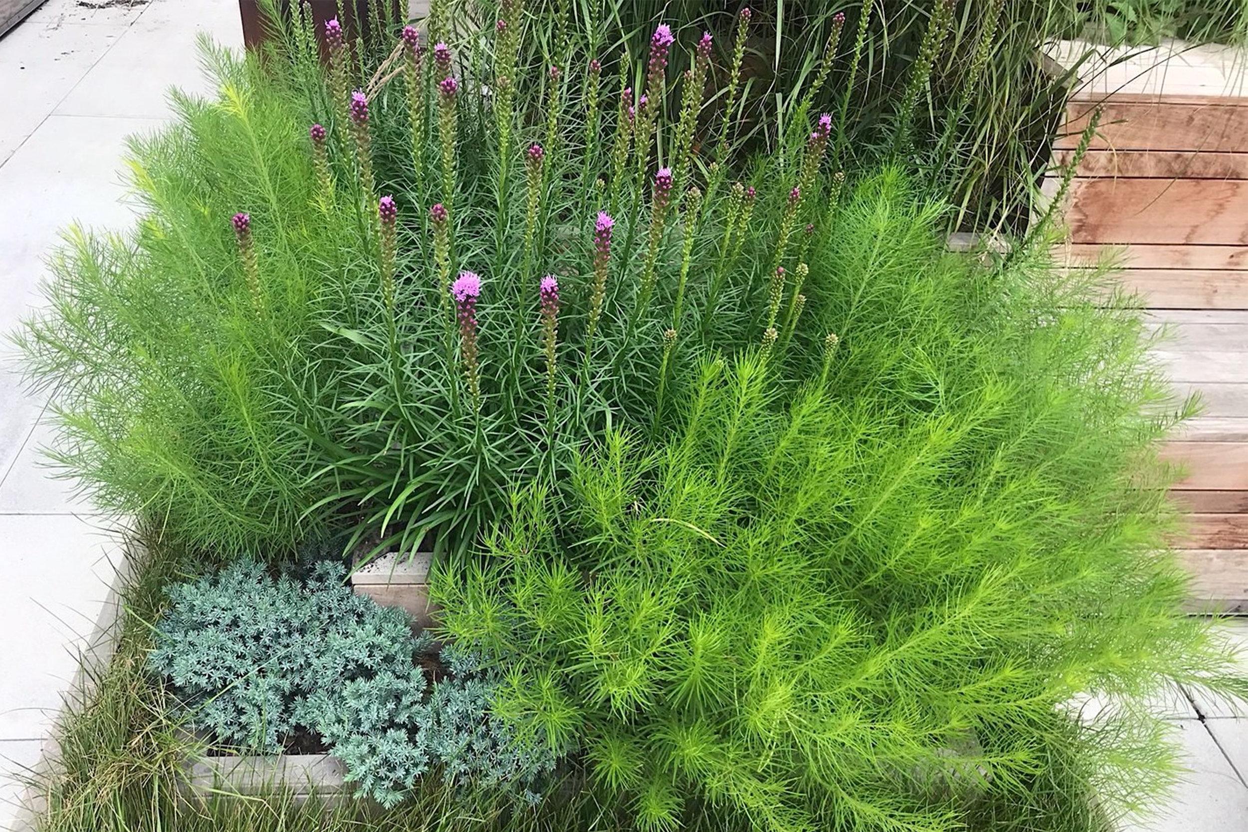 A close-up of some of the plantings by Morano Landscape & Garden Design.