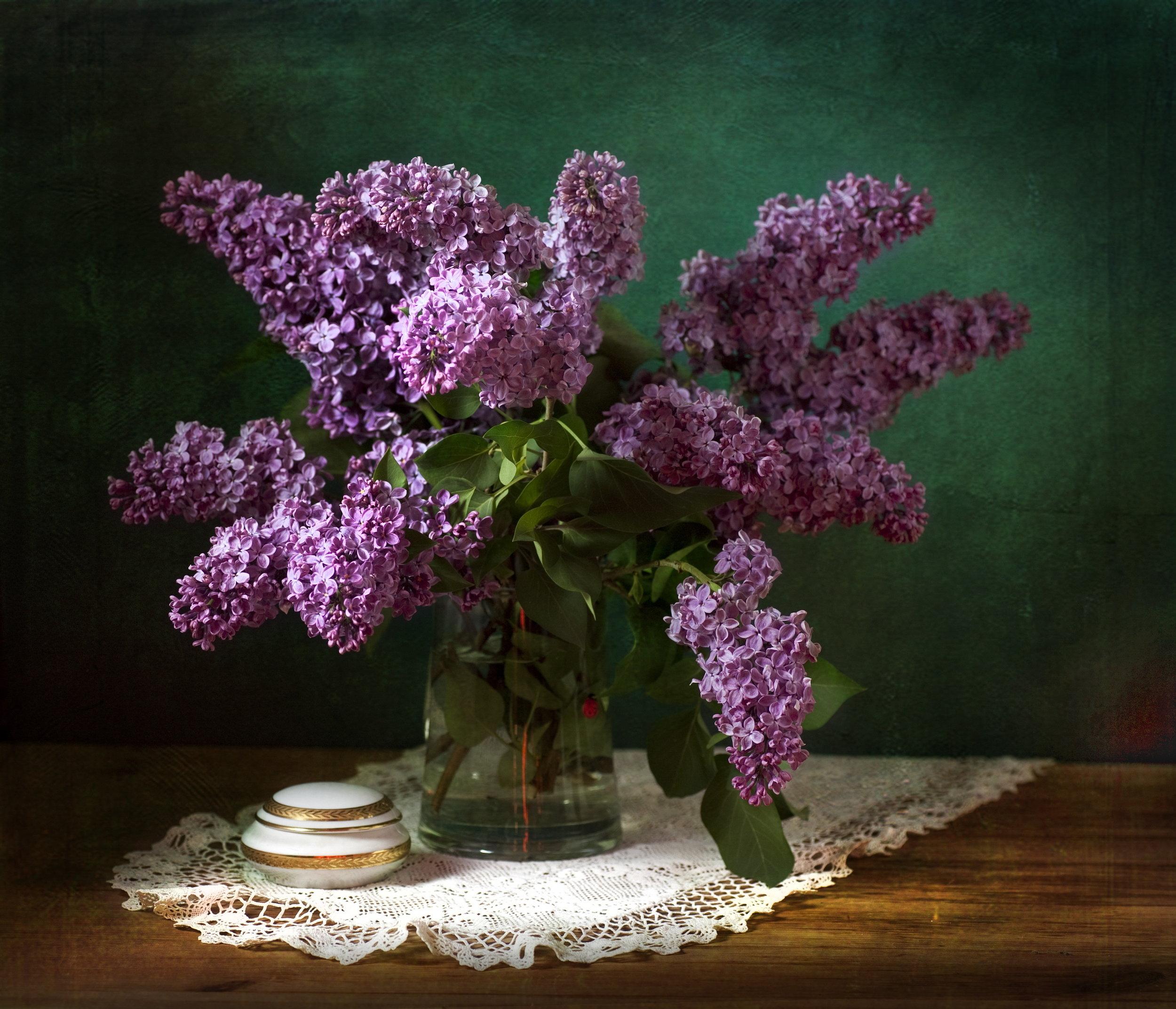 lilac-homestead-brooklyn-Syringa-vulgaris.jpg