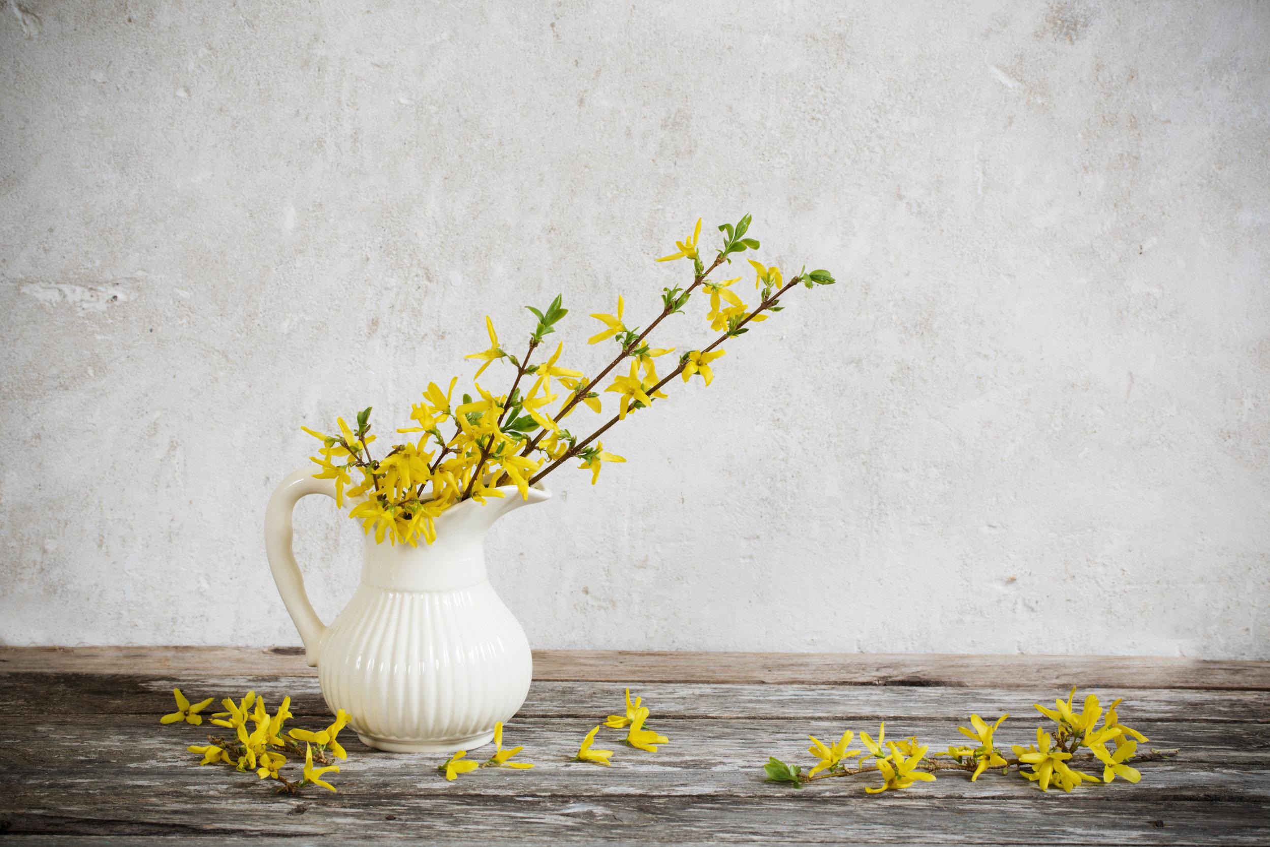 forsythia-flowers-homestead-brooklyn.jpg