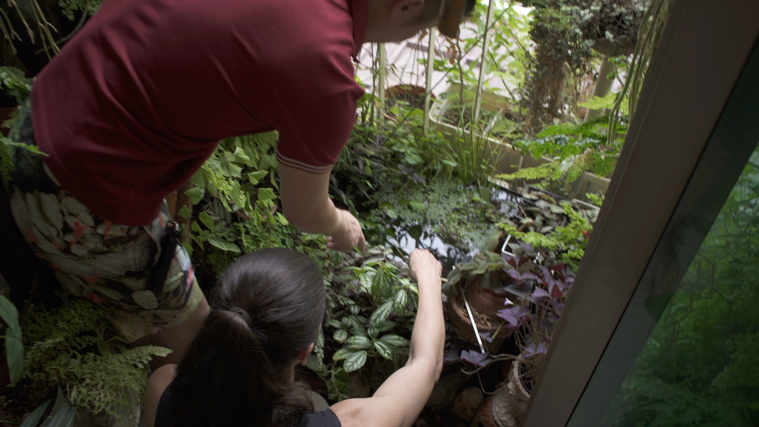 James installed a pond in his garden, which ultimately gave him the ability to grow more humid-loving plants like  Adiantum  and  Huperzia .