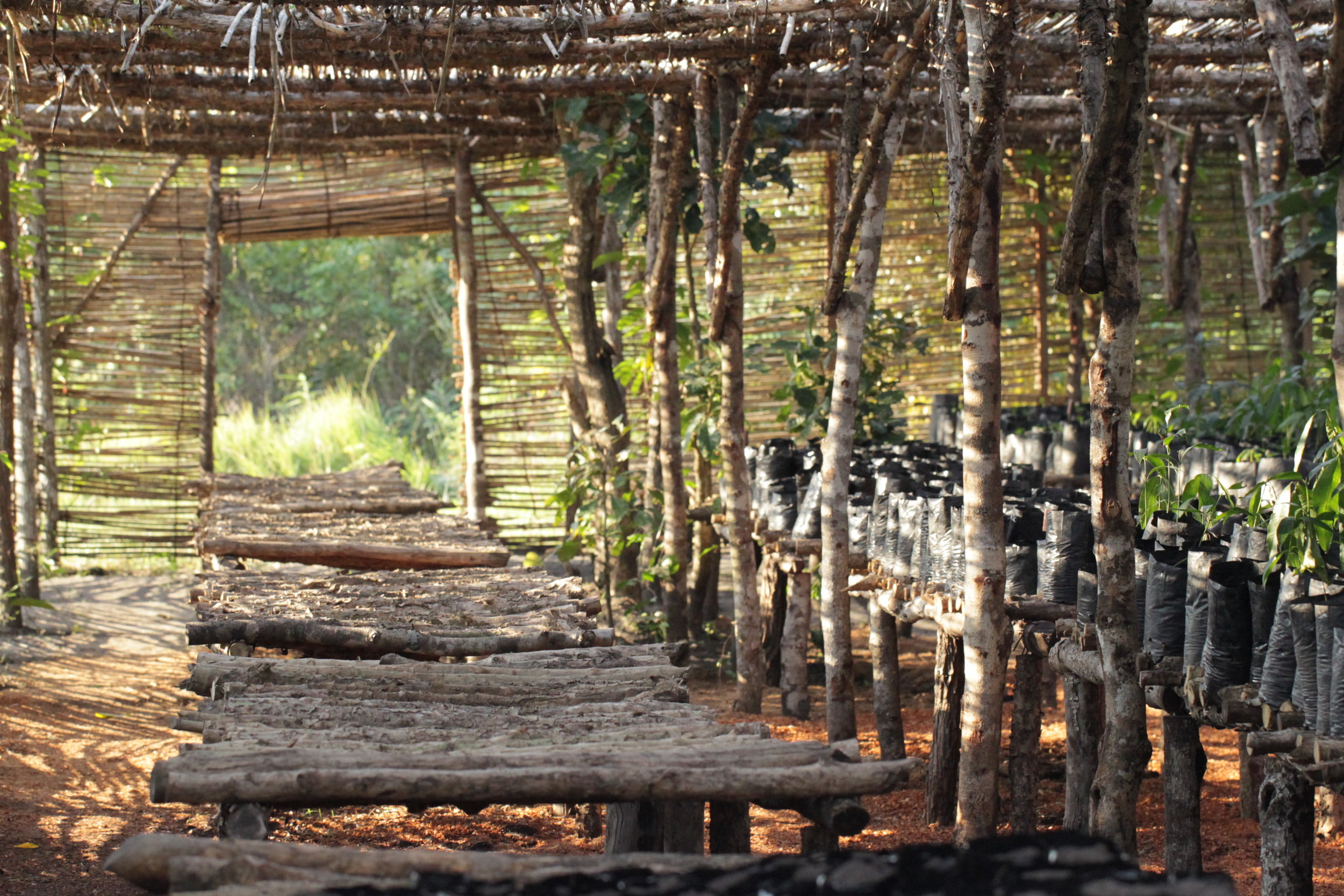 One of the tree nurseries that had been at Mezimbite Forest Centre prior to Hurricane Idai. These nurseries housed native trees that would be replanted throughout the Sofala Province of Mozambique.
