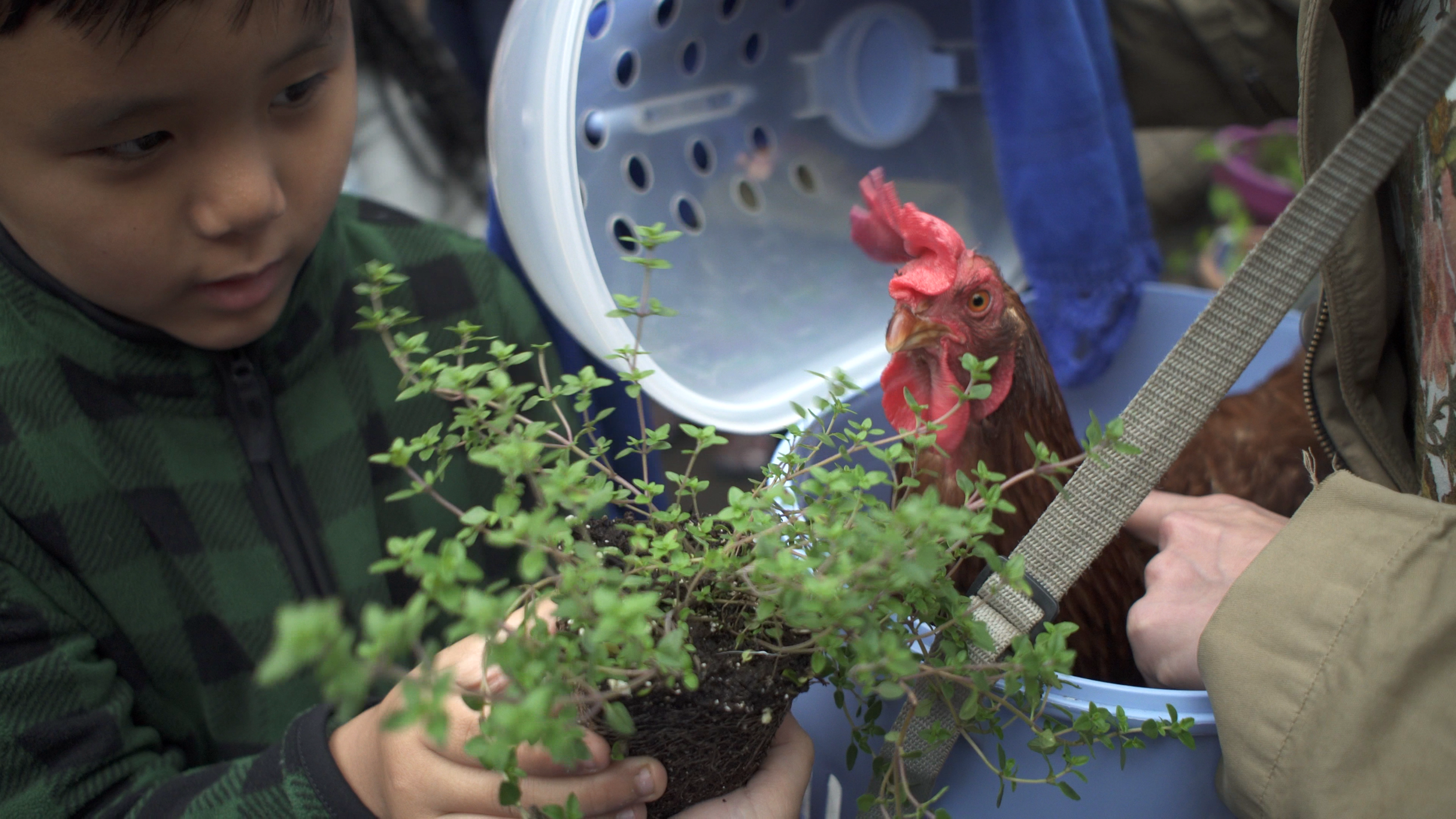 One of the students was fascinated at how quickly Kippee would consume his thyme plant.