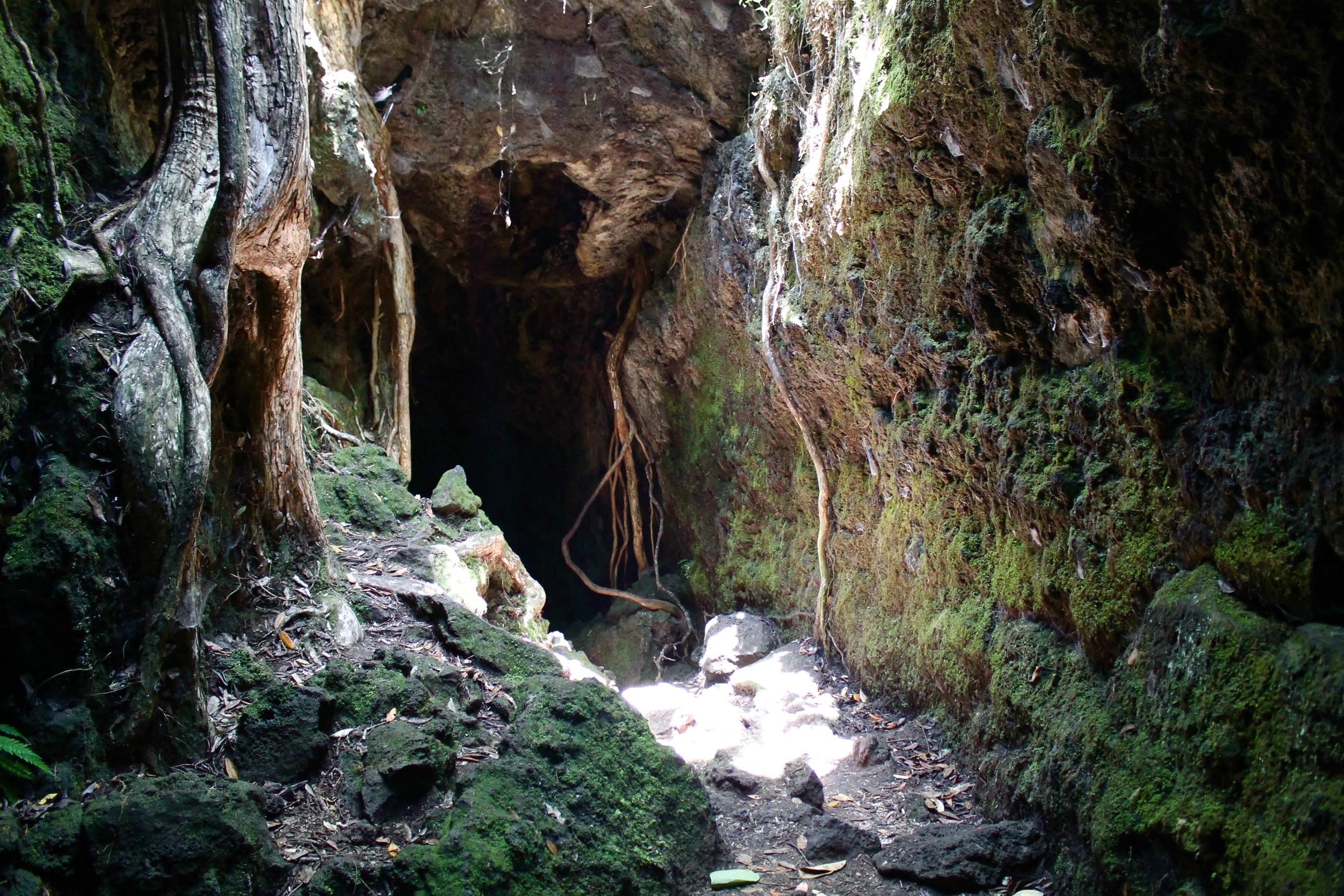 Lava caves, Rangitoto.