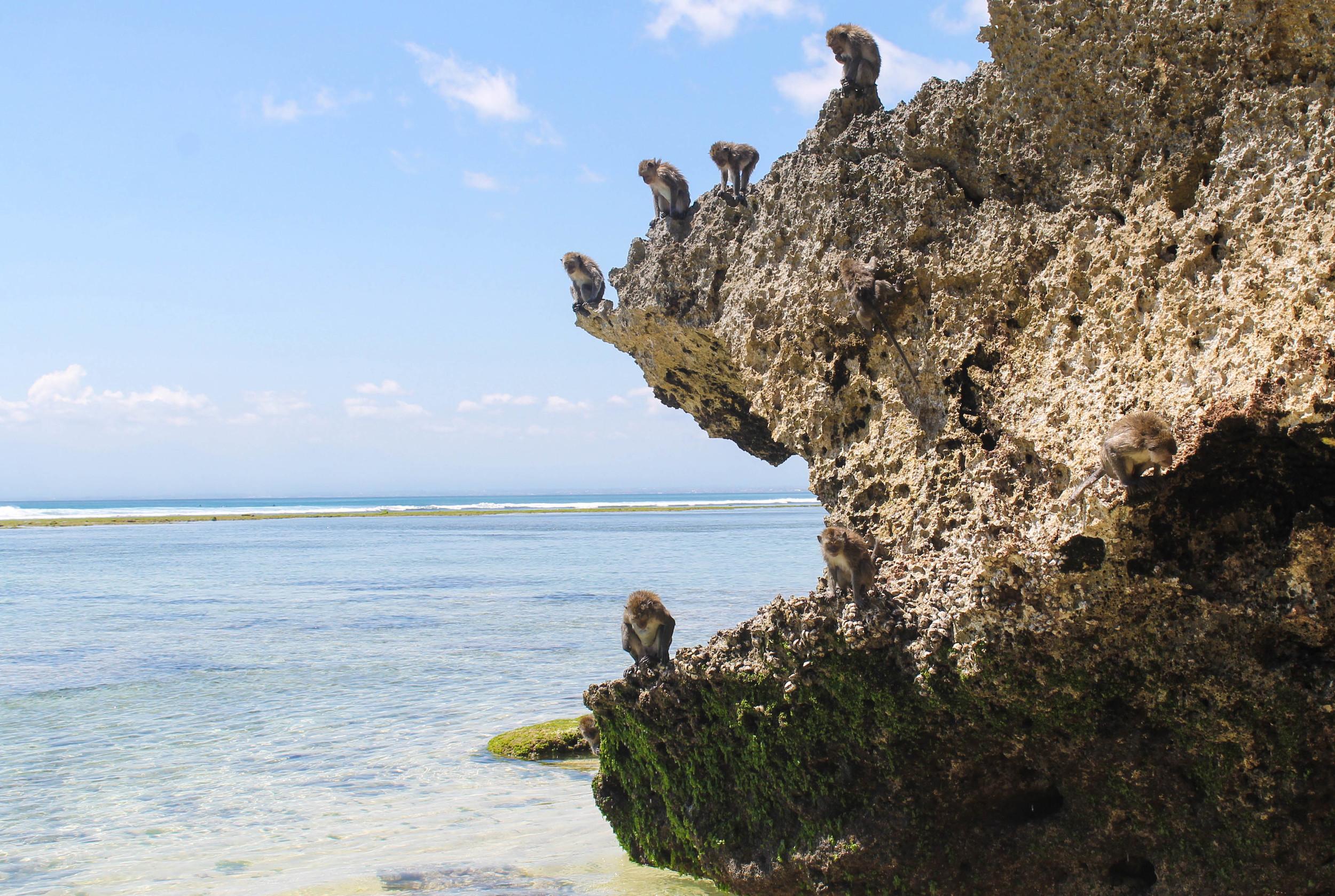 Monkeys at Padang Padang beach.