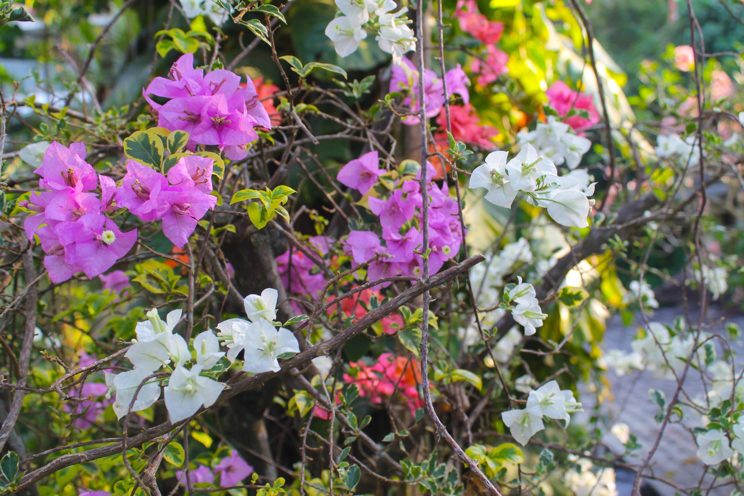 ubud-flowers