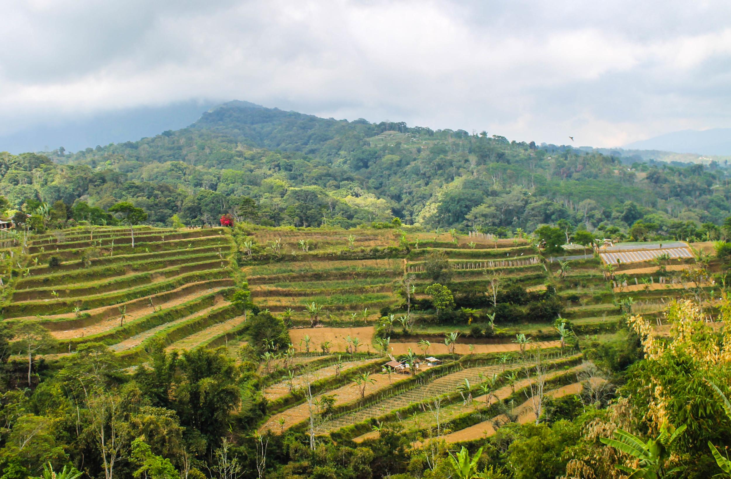 north-bali-fields