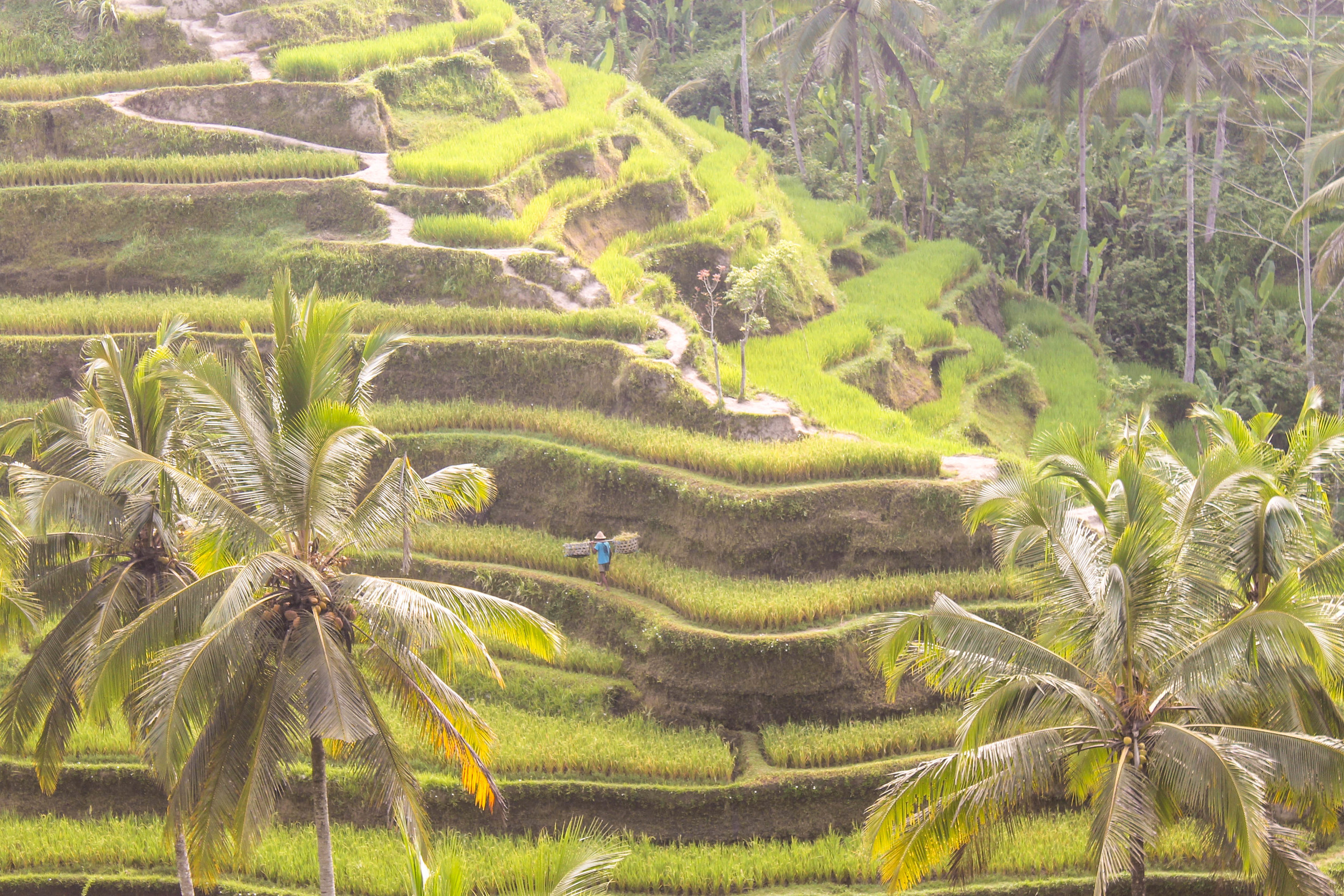 Ubud-Rice-Paddies