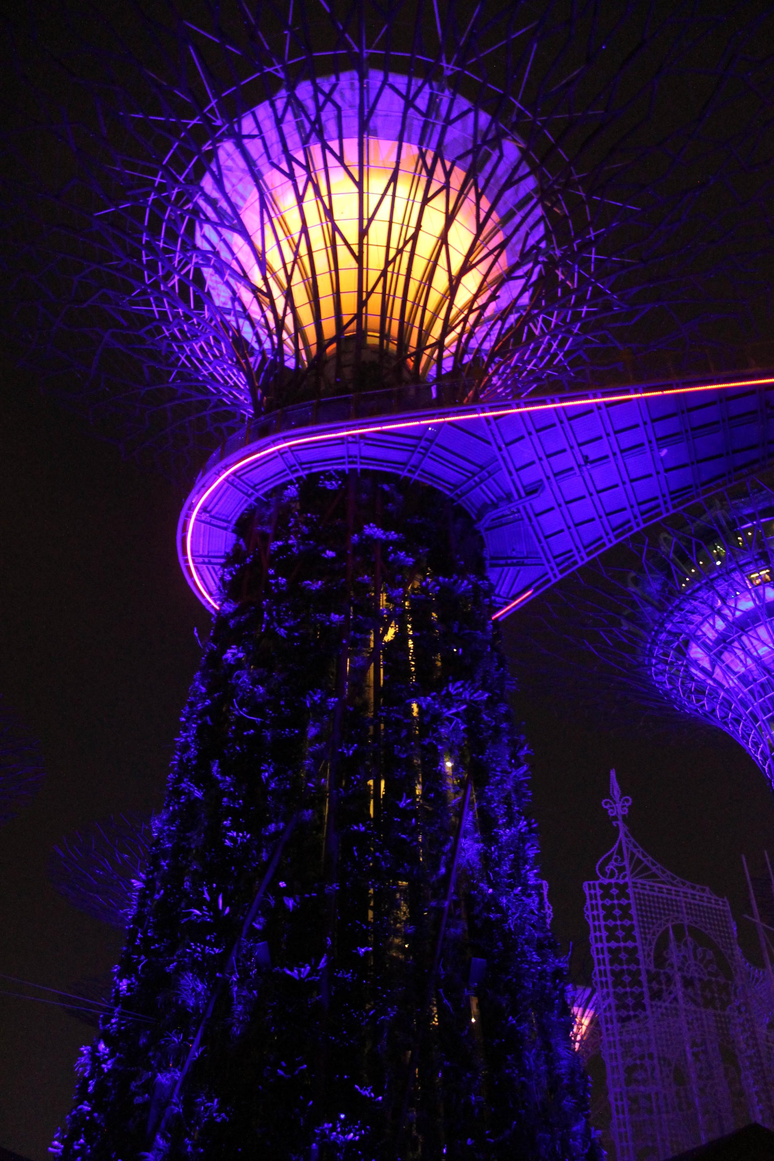 trees-singapore