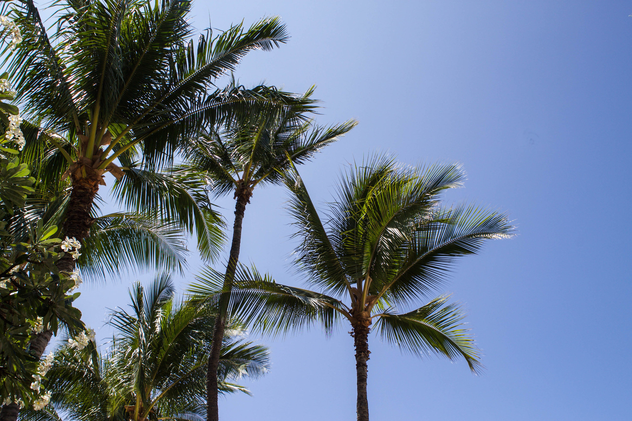 hawaii-palm-trees.jpg
