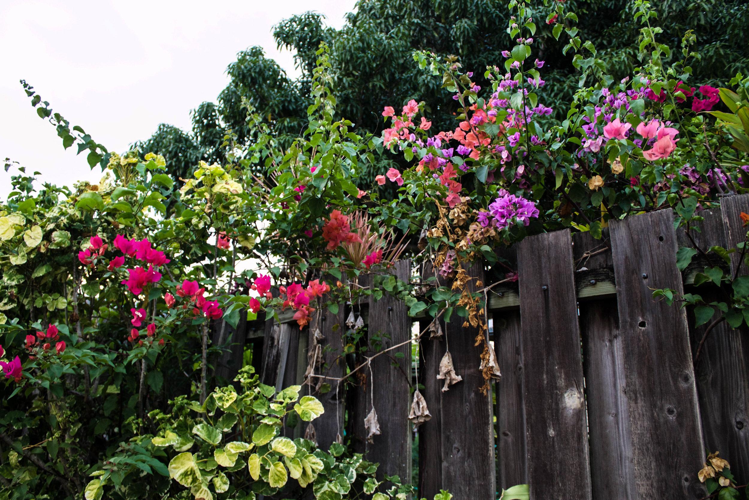 flowers-kailua.jpg