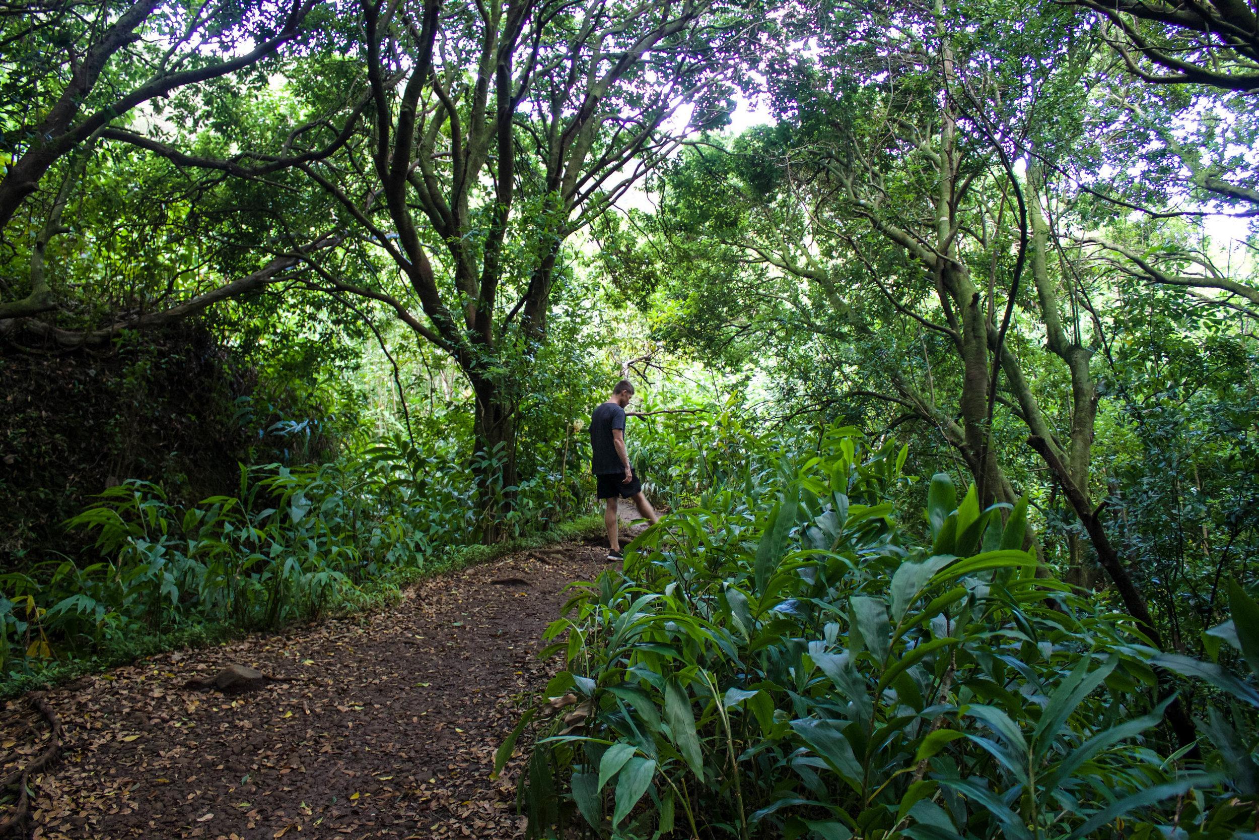 manoa-falls-hike.jpg