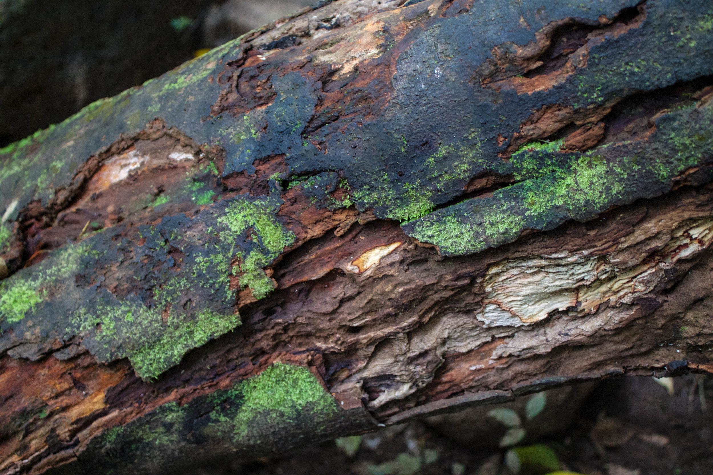 bark-manoa-falls.jpg