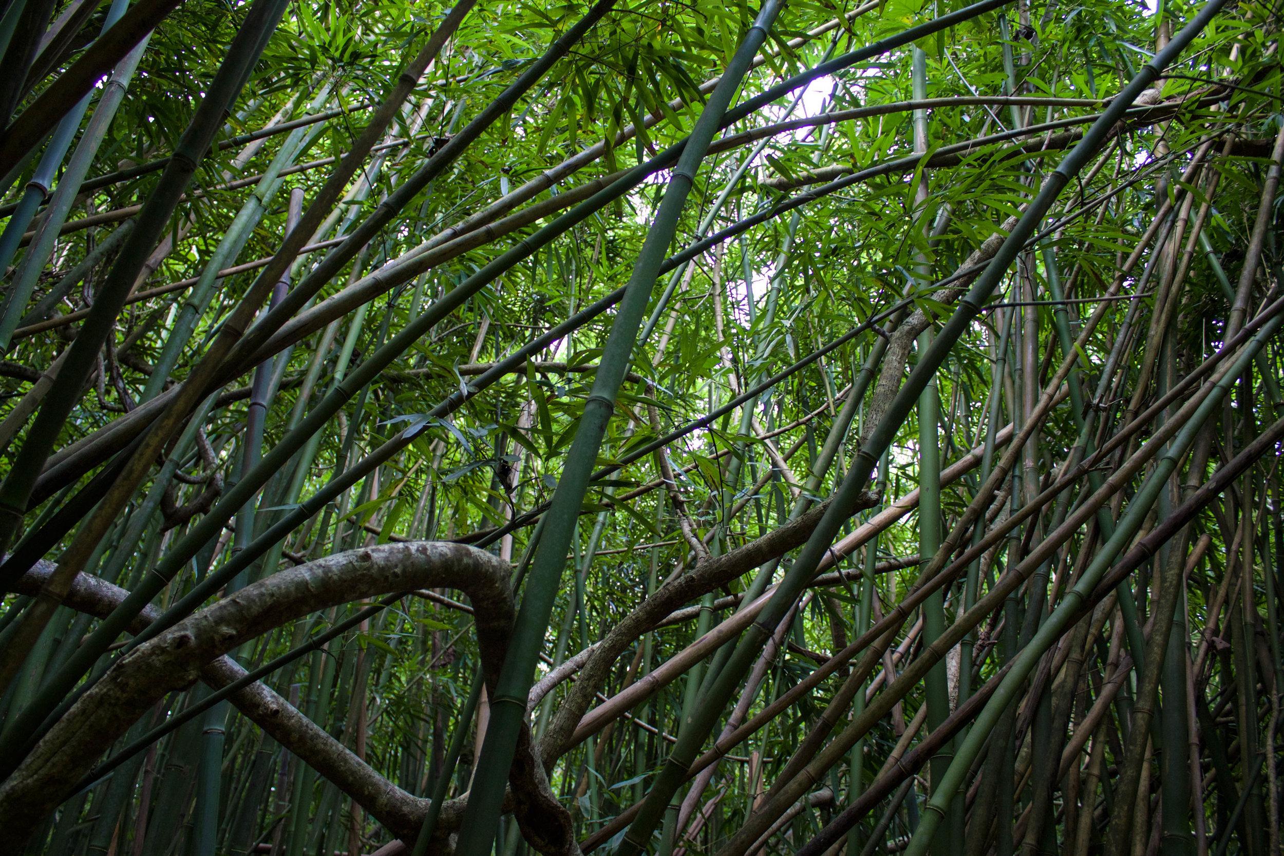 bamboo-forest-lulumahu-falls.jpg