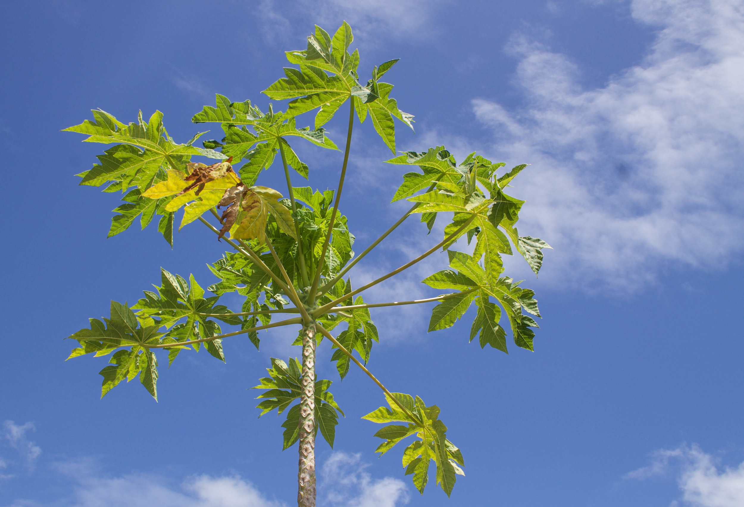 plant-kailua-house.jpg