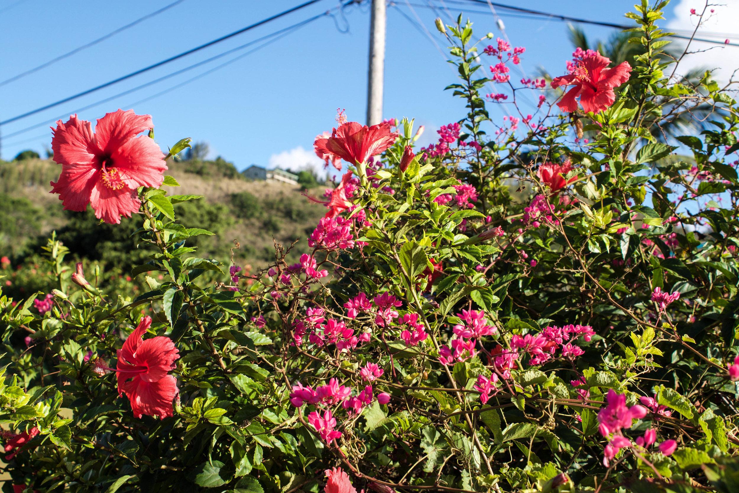 flowers-oahu.jpg