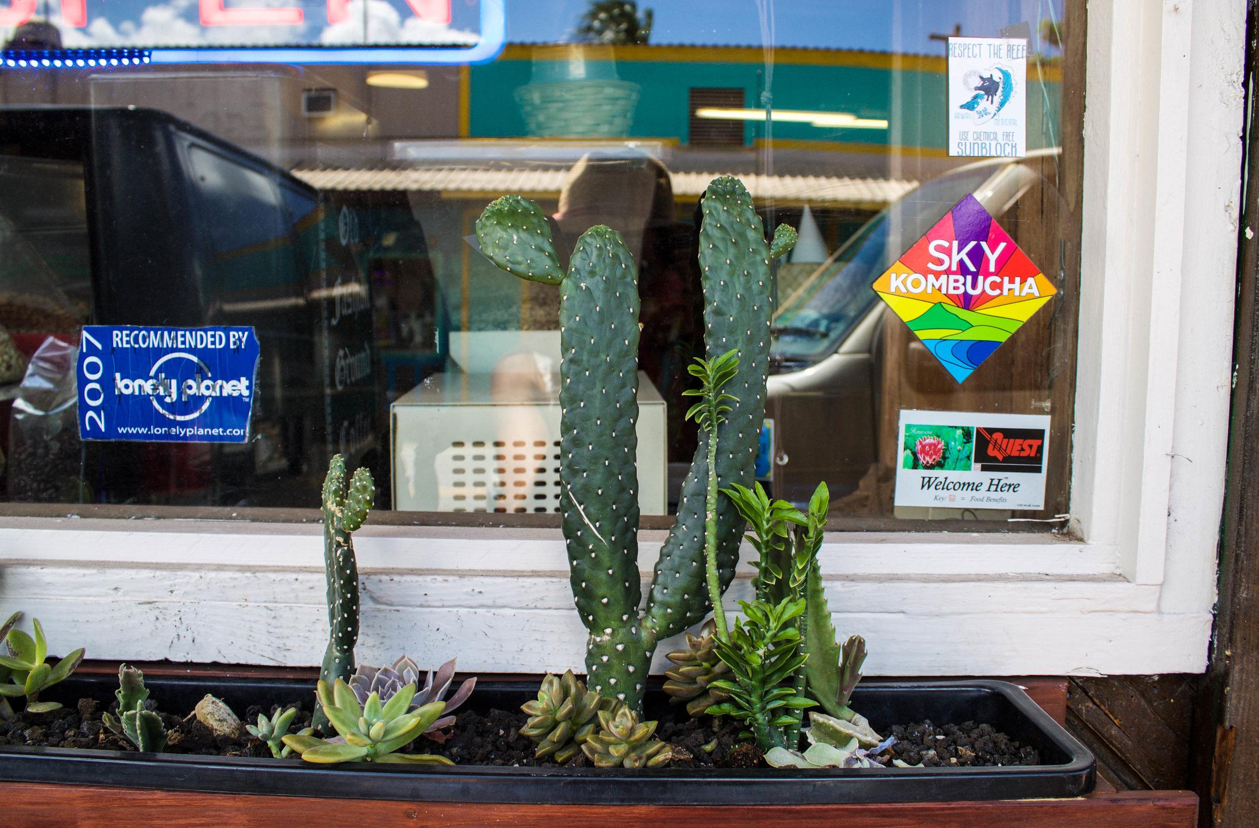 cactus-haleiwa.jpg