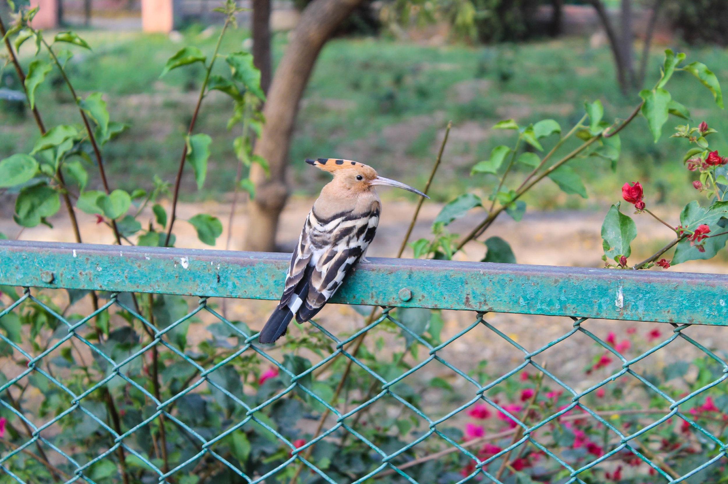 bird-jaipur.jpg