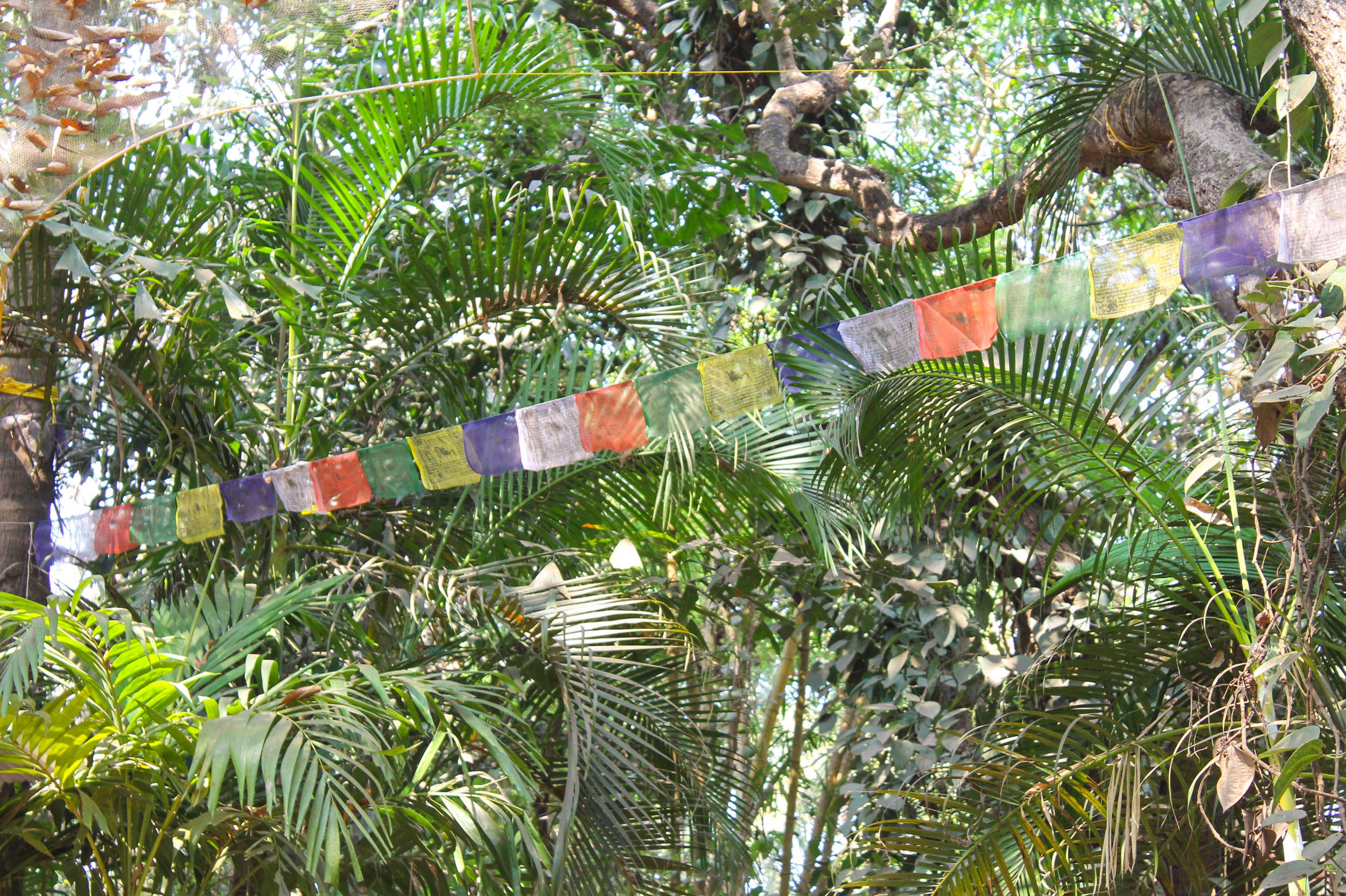 Tibetan prayer flags…