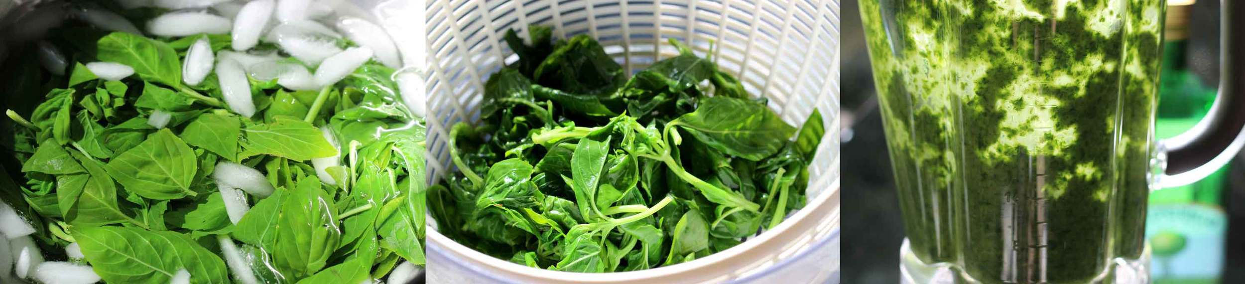 When making fresh basil oil, an ice bath followed by a drying cycle in a salad spinner  ensures a vibrant green color  when it hits the blender.