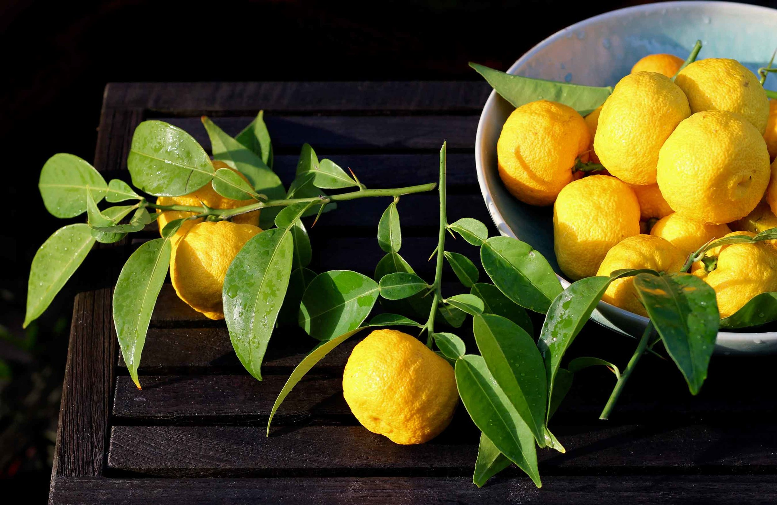 A bowl of freshly cut yuzu on a table in the garden. Ready to make yuzu kosho, recipe at threadandwhisk.com.