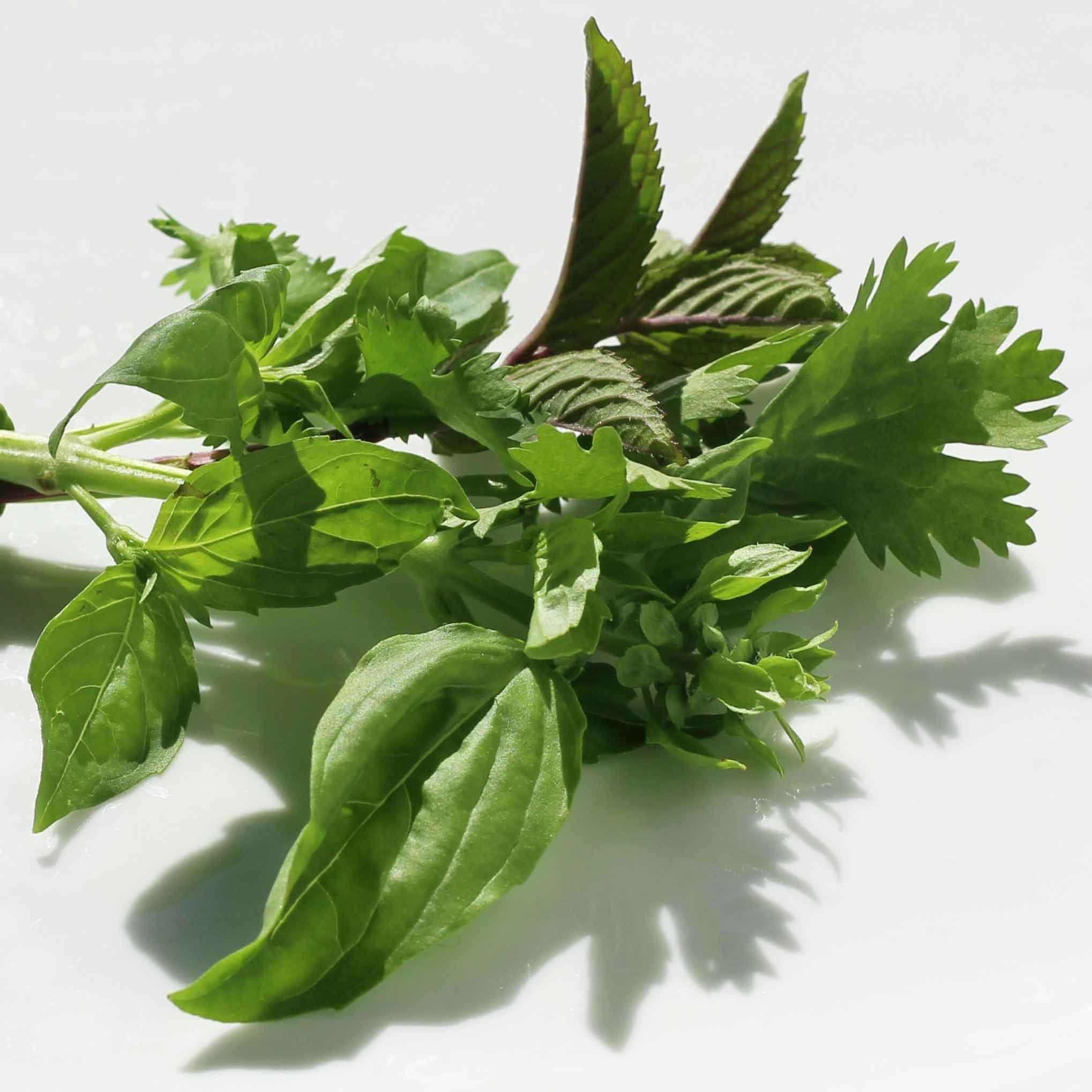 Garden fresh cilantro, basil and mint
