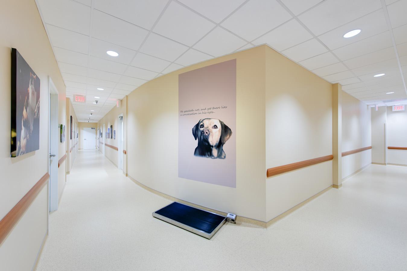 Hope Advanced Veterinary Center Image 175937.jpg