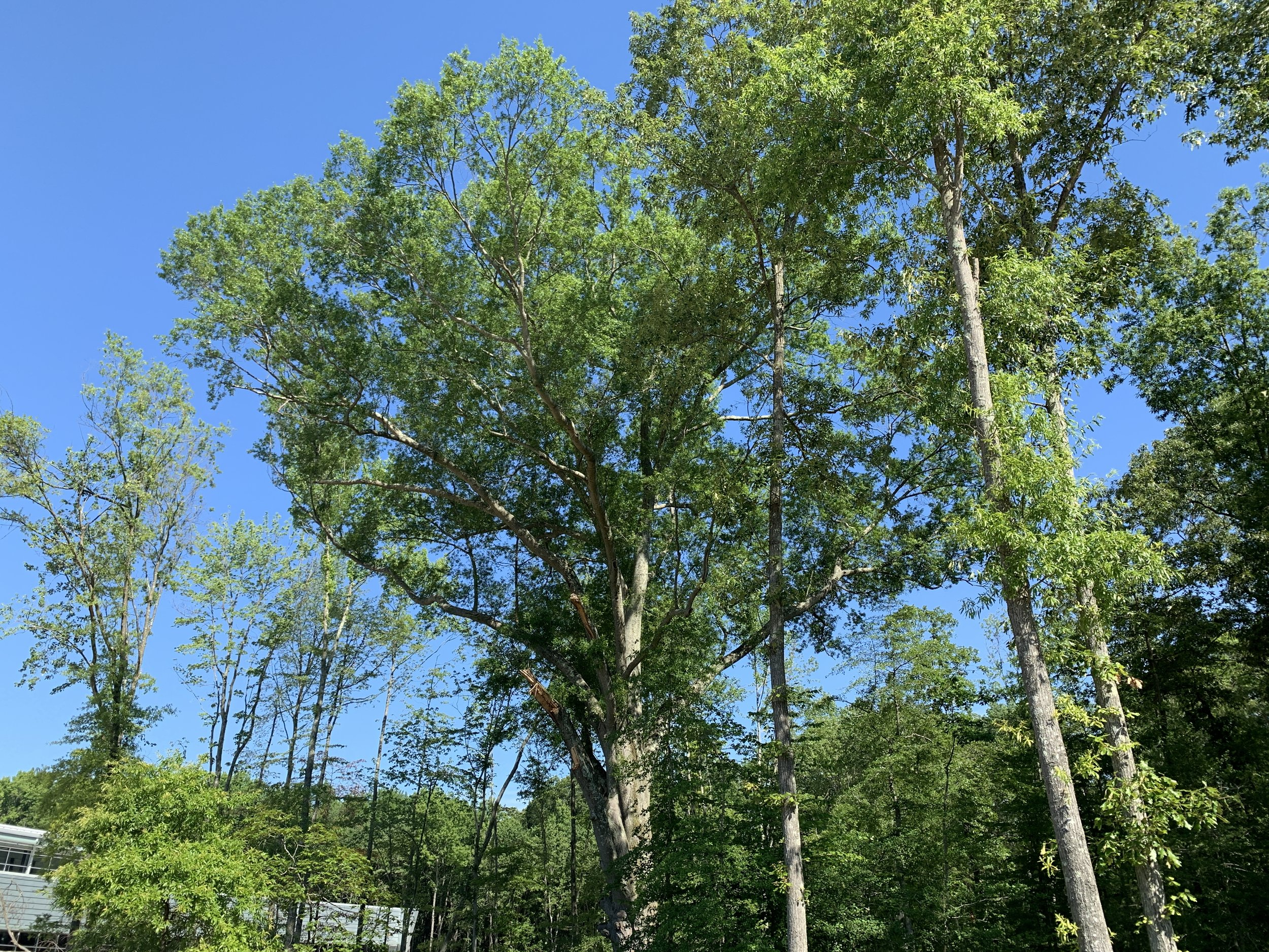 The mother specimen tree that seeded the hundreds of surrounding trees was named Willie Oak by artist, Judy Moore.
