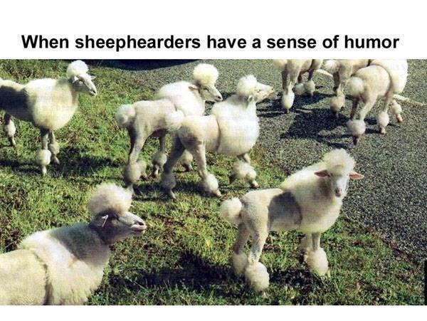 Cool summer style (yes, the sheephearders thing bothers me, too, but it came with the image!)