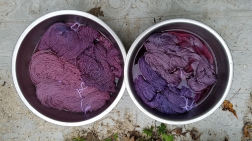 Before the final rinse. See all the grapey goodness?
