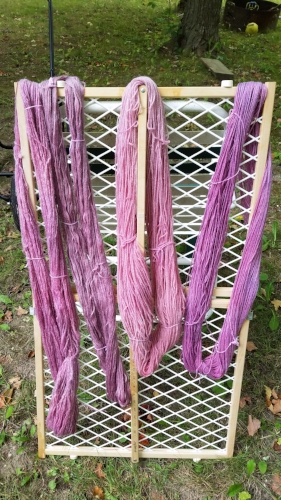 After my incomplete rinse out of the dye, but also a citric acid soak.
