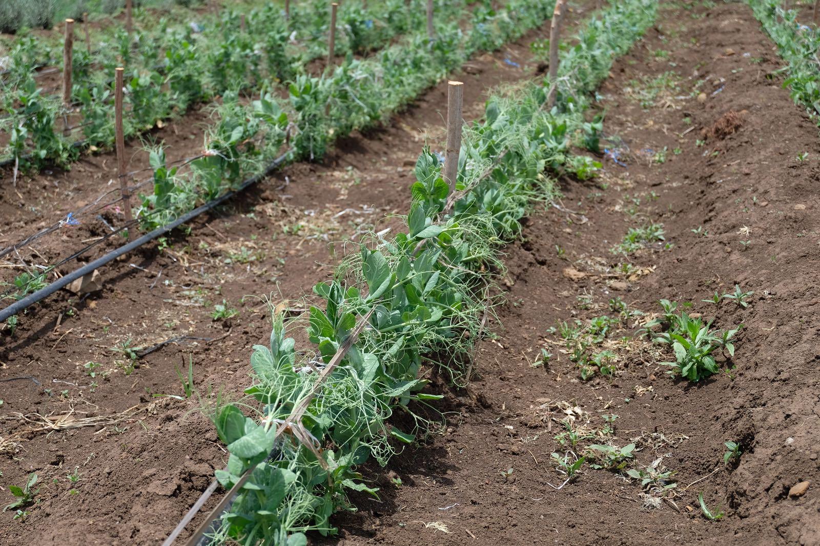Premium    Organic    Food