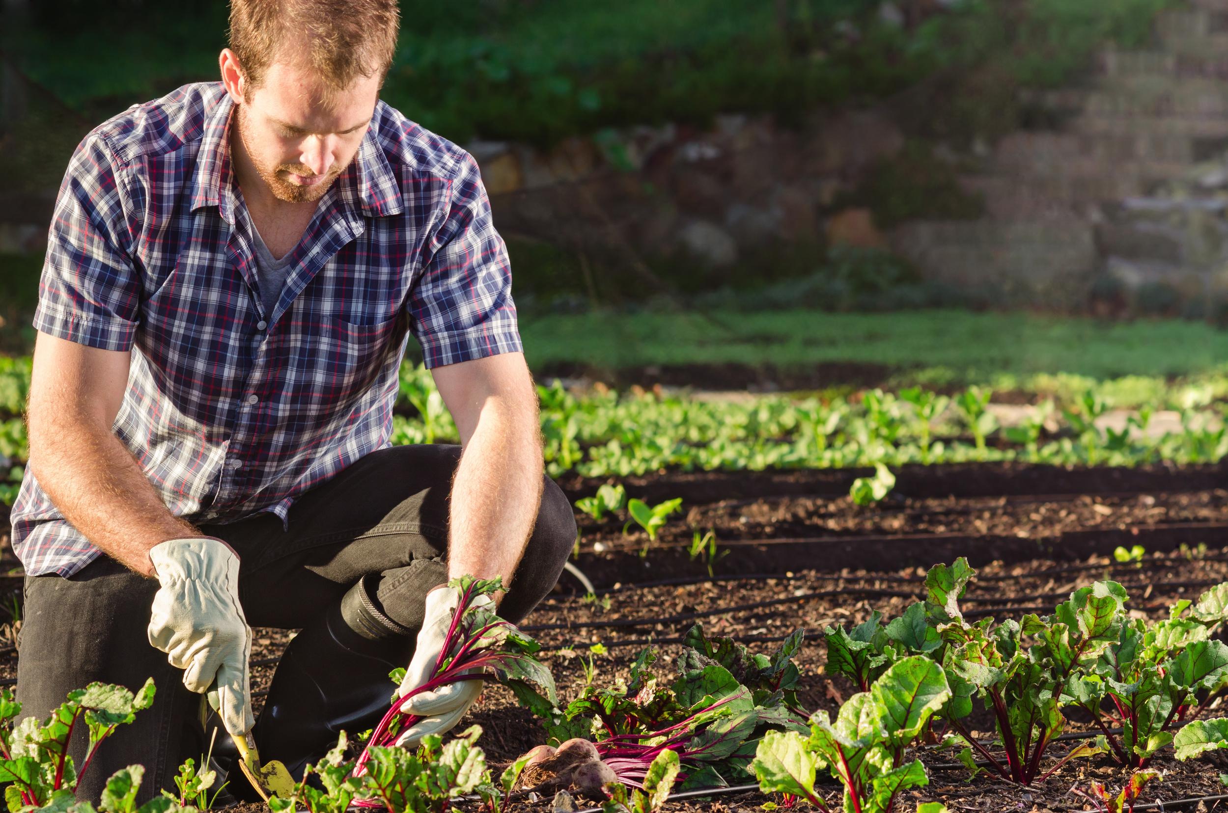 permabee-harvesting.jpg