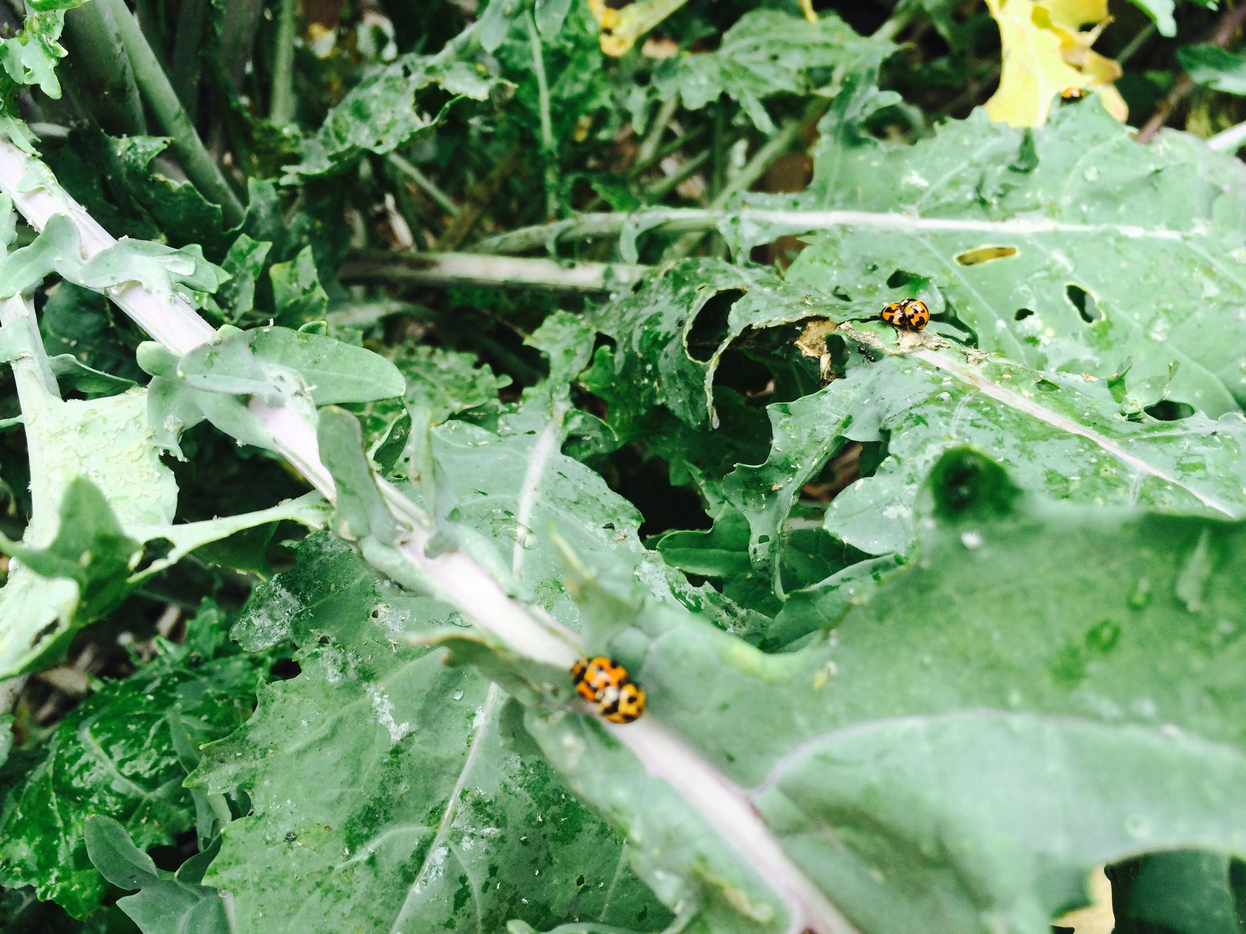 """""""Ladybird Orgy"""" by Eli Rogan"""