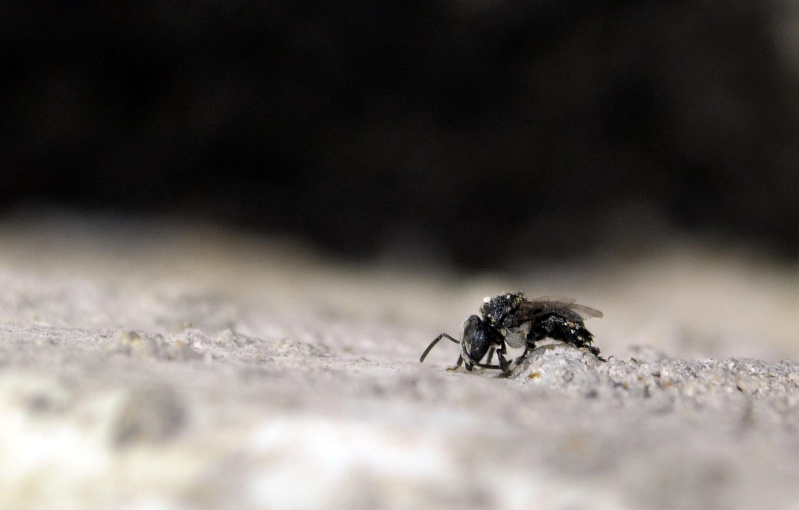 """""""Battle-weary bee"""" by Paul Ryan"""
