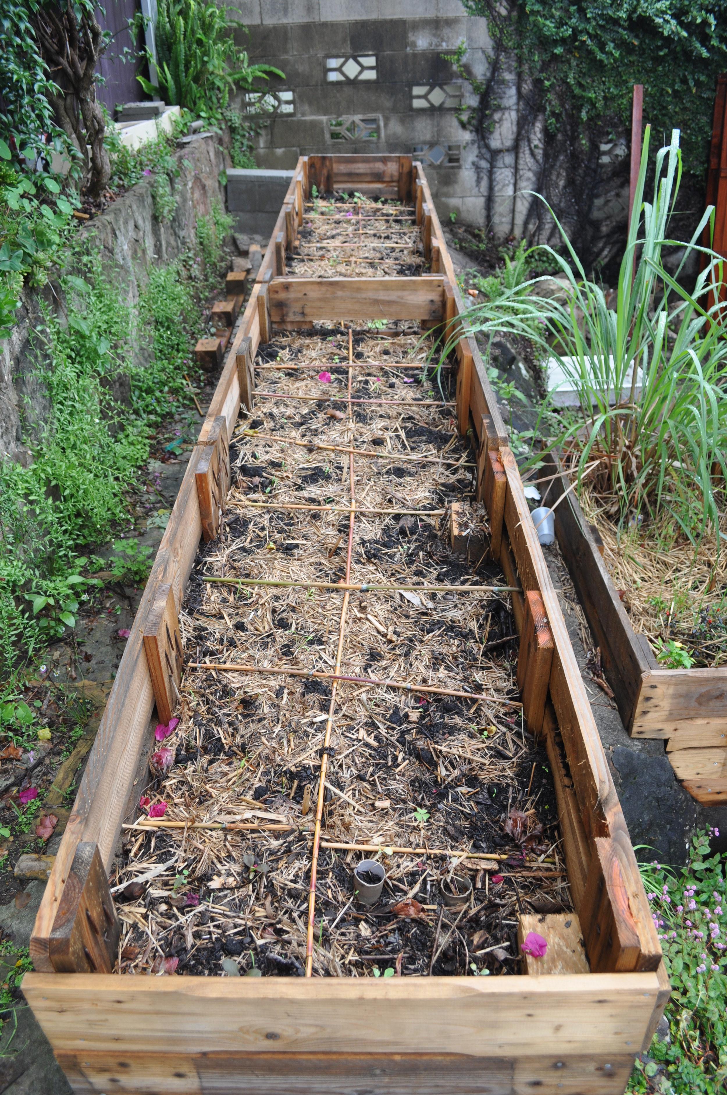 """""""Square metre gardening"""" by Caroline Ryan"""