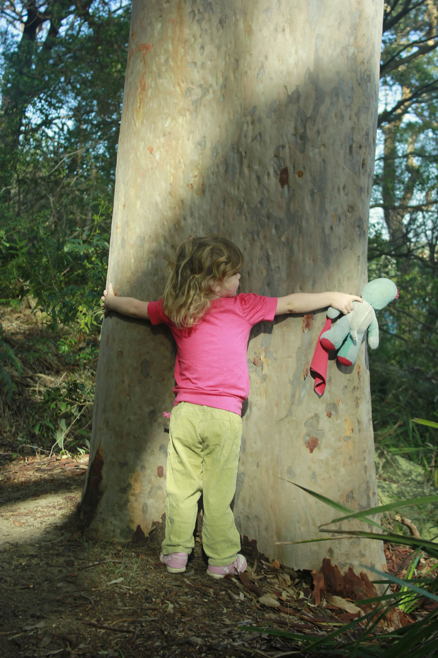 Tree Hugger by Nicky Robbins