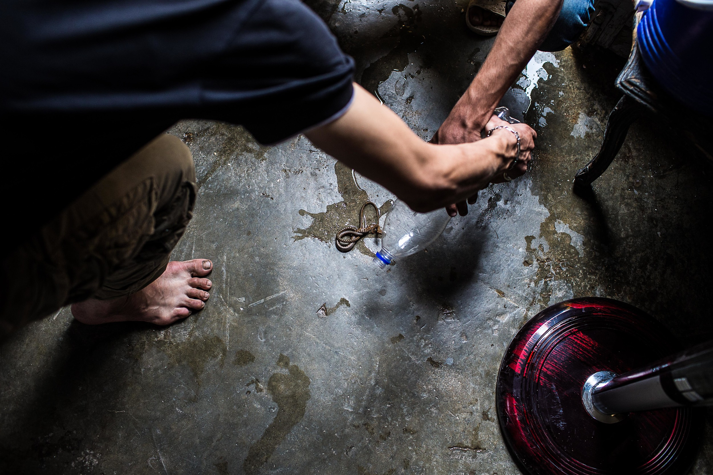 "Fighters check on snakes they captured two weeks before. ""We should give them water,"" says one, ""they may be thirsty."""