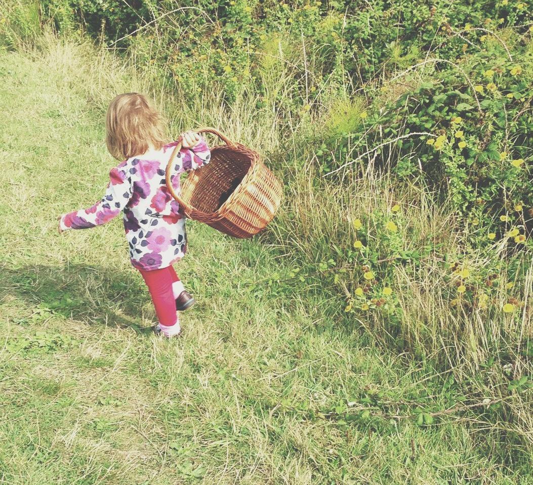 poppy forage.jpg