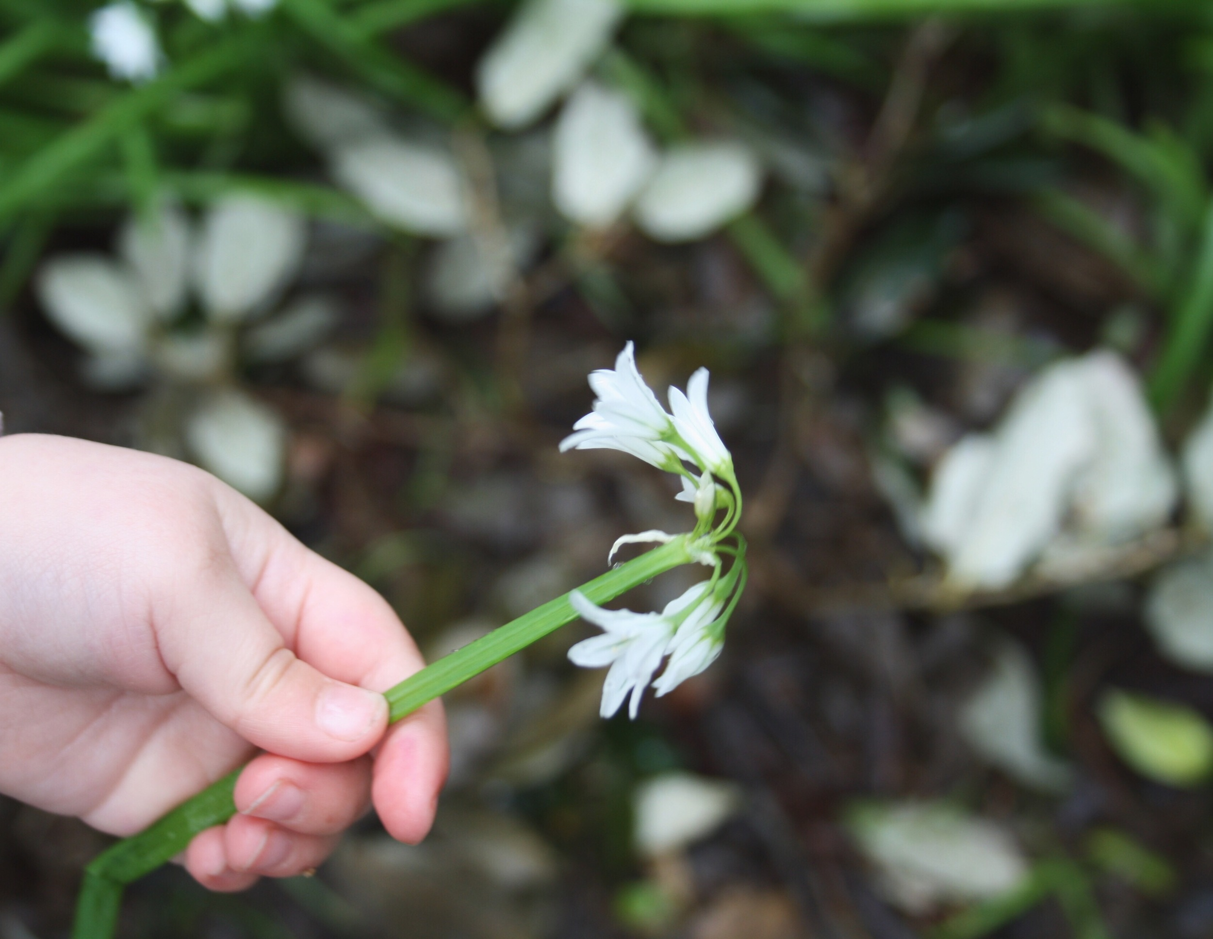 foraging for wild garlic can be a family affair