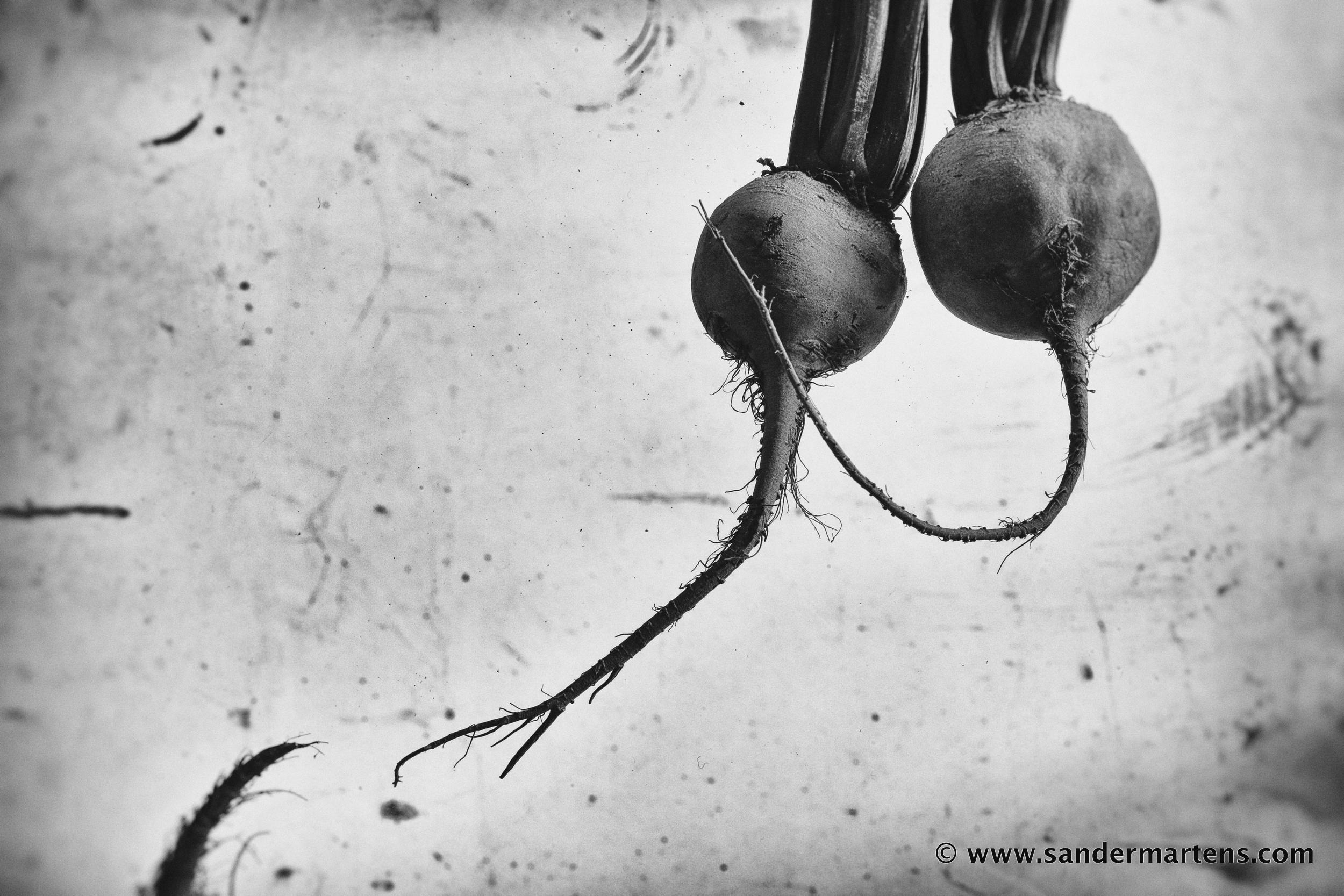 """Beet root"", from the ""Form over Function"" series."