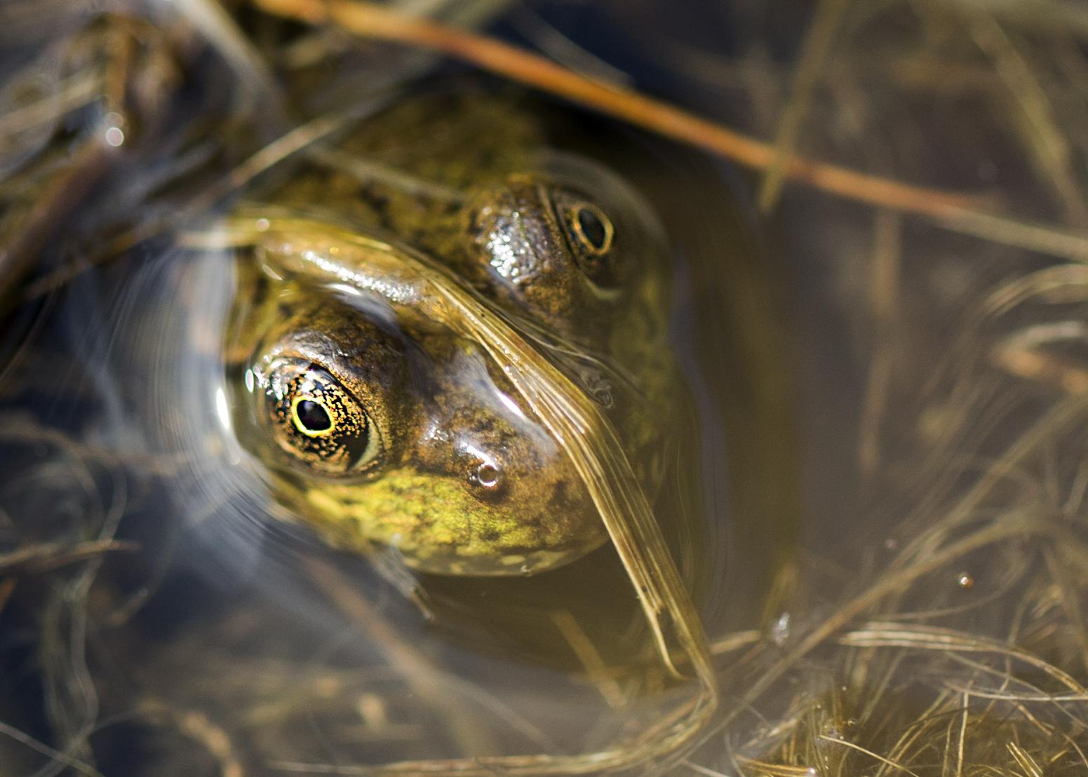 frogsmile.jpg