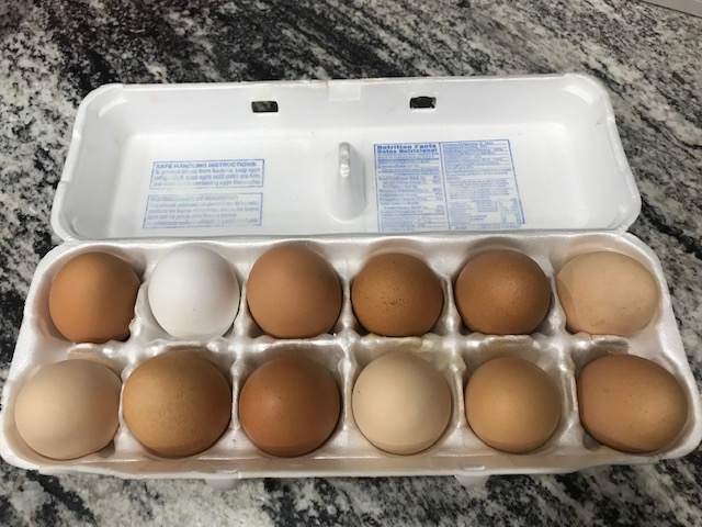 Pastured Eggs - $6/dz. Don't let just the shell color fool you! Brown eggs can come from factory farms too! What matters is the yolk color. Deep rich orange yolks, bursting with flavor. Birds are allowed to roam freely on pasture, and moved often to ensure a clean, healthy environment, and ample variety of forage. The fence is to protect them, not really contain them.