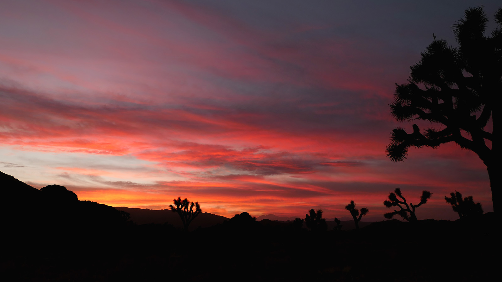 california_11.jpg